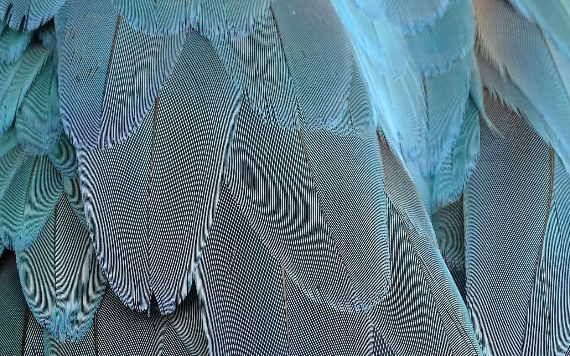 De nouveaux fossiles de ptérosaures suggèrent que l'apparition des plumes remonte à 100 millions d'années avant celle des oiseaux. © manfredrichter, Pixabay License