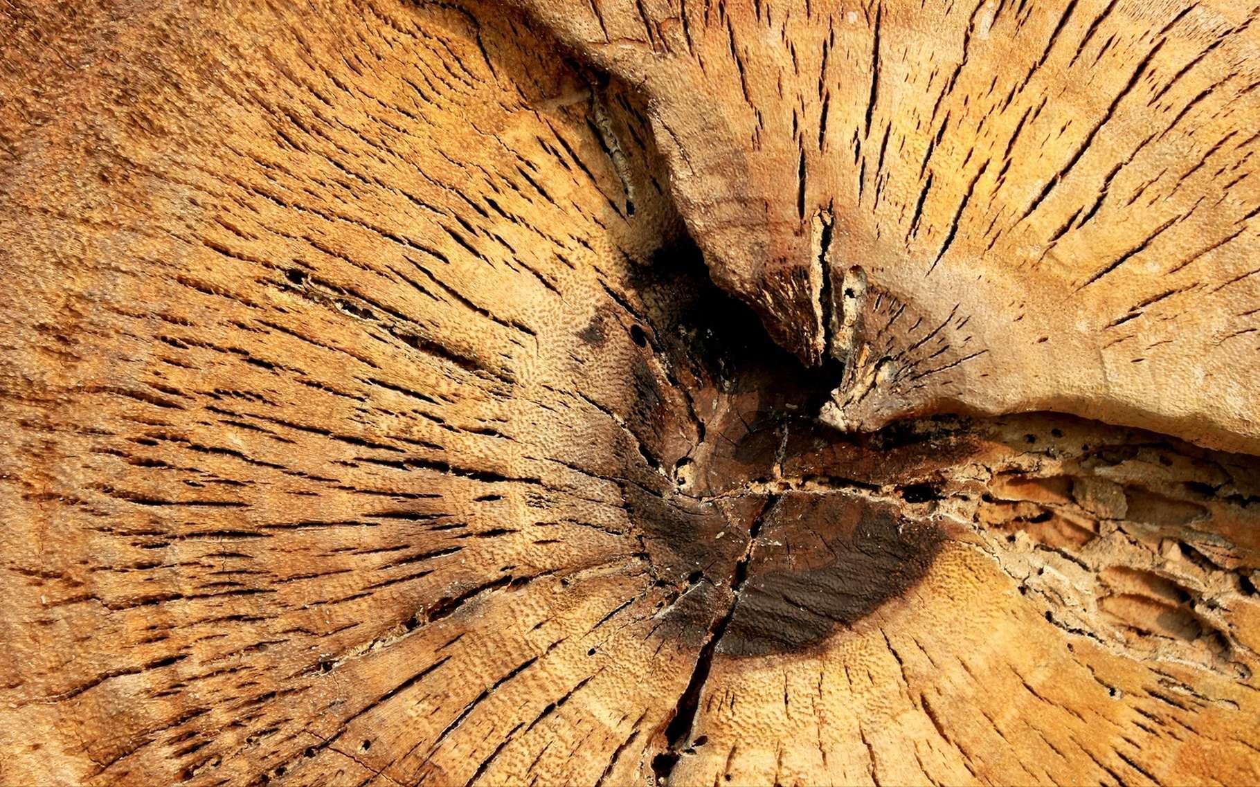 L'hémicellulose est un composant du bois. © wichai Deewong, Shutterstock