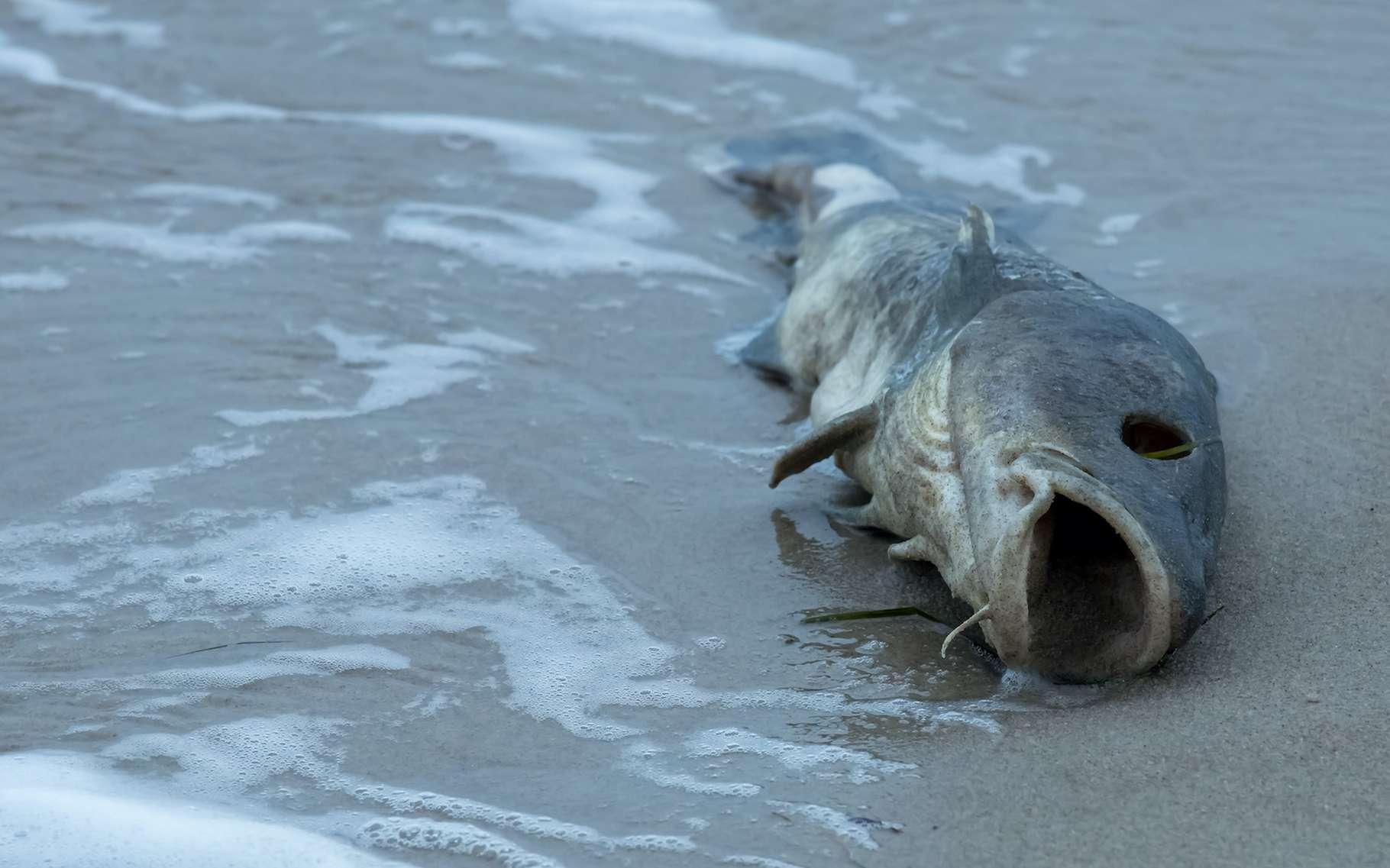 Des chercheurs de l'université du Connecticut (États-Unis) montrent comment des algues et des bactéries toxiques ont proliféré dans les eaux au moment de l'extinction de masse du Permien-Trias. L'histoire pourrait être en train de se répéter. © Rainer Fuhrmann, Adobe Stock