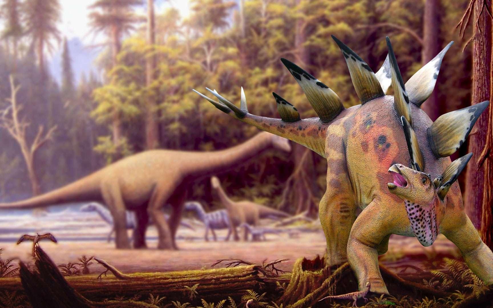 Albertosaurus - squelette. Albertosaurus (ce qui signifie « lézard de l'Alberta ») est un genre de dinosaure théropode de la famille des tyrannosauridés qui vivait dans l'Ouest de l'Amérique du Nord au début du Maastrichtien (Crétacé supérieur), il y a 73 à 70 millions d'années. L'espèce type, A. sarcophagus, décrite par Osborn en 1905, semble n'avoir vécu que dans l'actuelle province canadienne de l'Alberta, qui a donné son nom au genre de l'animal. Les scientifiques sont en désaccord sur les espèces appartenant au genre, quelques-uns considérant Gorgosaurus libratus comme une seconde espèce du genre. Comme les autres tyrannosauridés, Albertosaurus était un prédateur bipède doté de petites pattes avant, terminées par deux doigts et avait une tête massive aux mâchoires garnies des dizaines de grandes dents pointues. Carnivore, il semble avoir été au sommet de la chaîne alimentaire dans son écosystème local. Bien que de taille relativement importante pour un théropode, Albertosaurus était beaucoup plus petit que le plus célèbre de ses cousins, Tyrannosaurus, et pesait sans doute moins de deux tonnes. Depuis la première découverte en 1884, des fossiles de plus de trente individus ont été récupérés, permettant aux scientifiques d'avoir une connaissance de son anatomie beaucoup plus approfondie que pour la plupart des autres tyrannosauridés. La découverte de 22 individus sur un même site semble fournir une preuve de son mode de chasse en groupe et permet des études d'ontogénie et de biologie des populations qui sont impossibles sur les dinosaures moins connus. Albertosaurus était beaucoup moins gros que les gigantesques tyrannosauridés comme Tarbosaurus et Tyrannosaurus. La plupart des adultes mesuraient jusqu'à 9 mètres de long, alors que de rares individus très âgés pouvaient dépasser 10 mètres. Plusieurs estimations pondérales indépendantes, obtenues par des méthodes différentes, suggèrent qu'un Albertosaurus adulte pesait entre 1,3 tonne et 1,7 tonne. Sa tête massiv