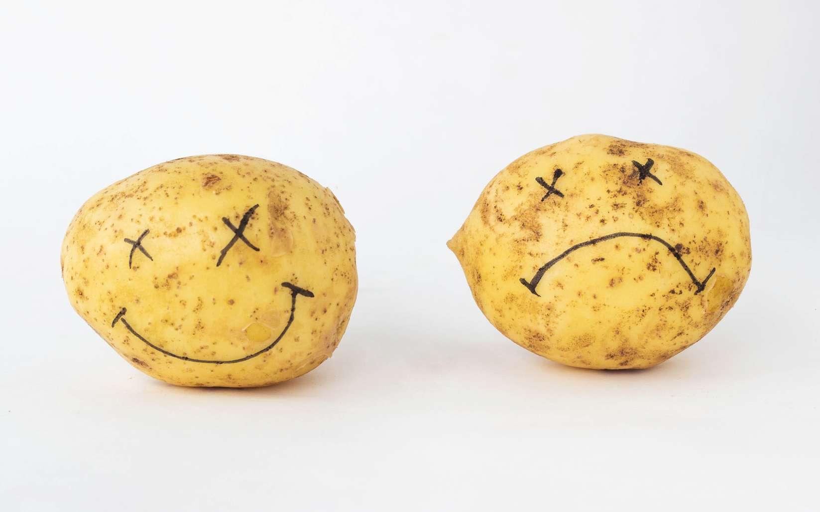 OGM : bons ou mauvais pour la santé ? © HENADZY, Fotolia