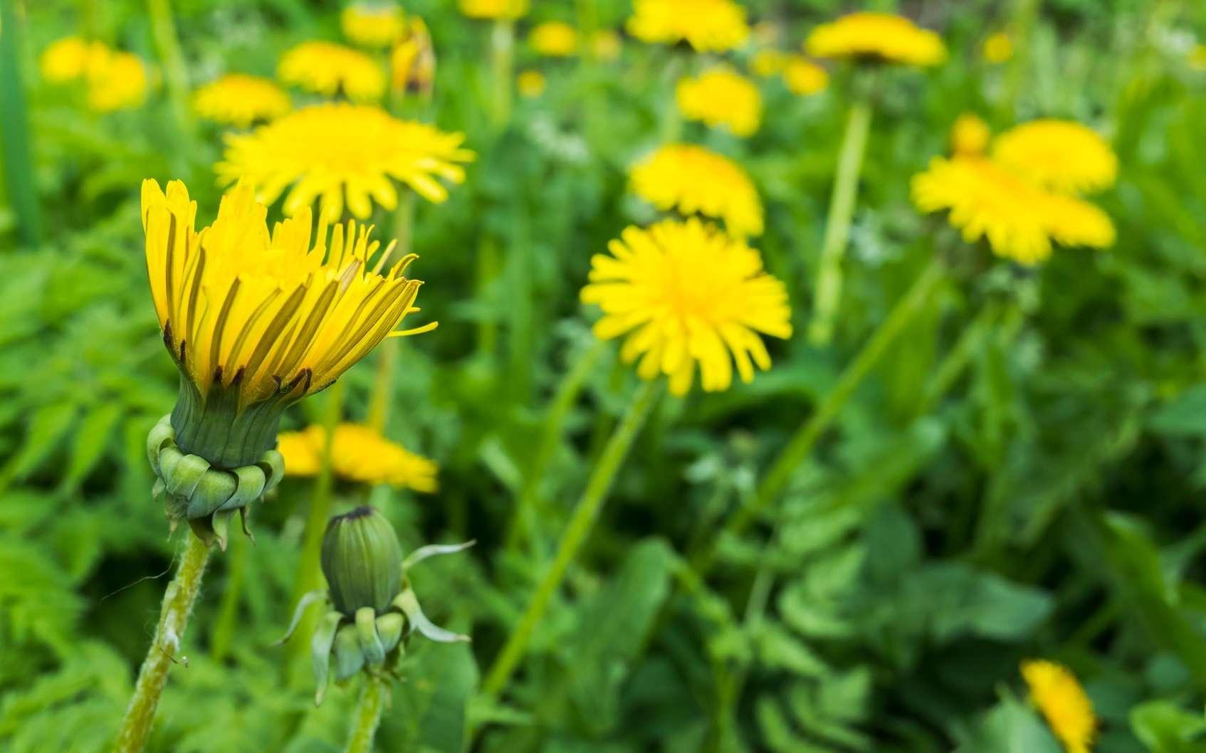 Ras-le-bol des mauvaises herbes ? Ne jetez pas tout ! © eugenesergeev, Fotolia