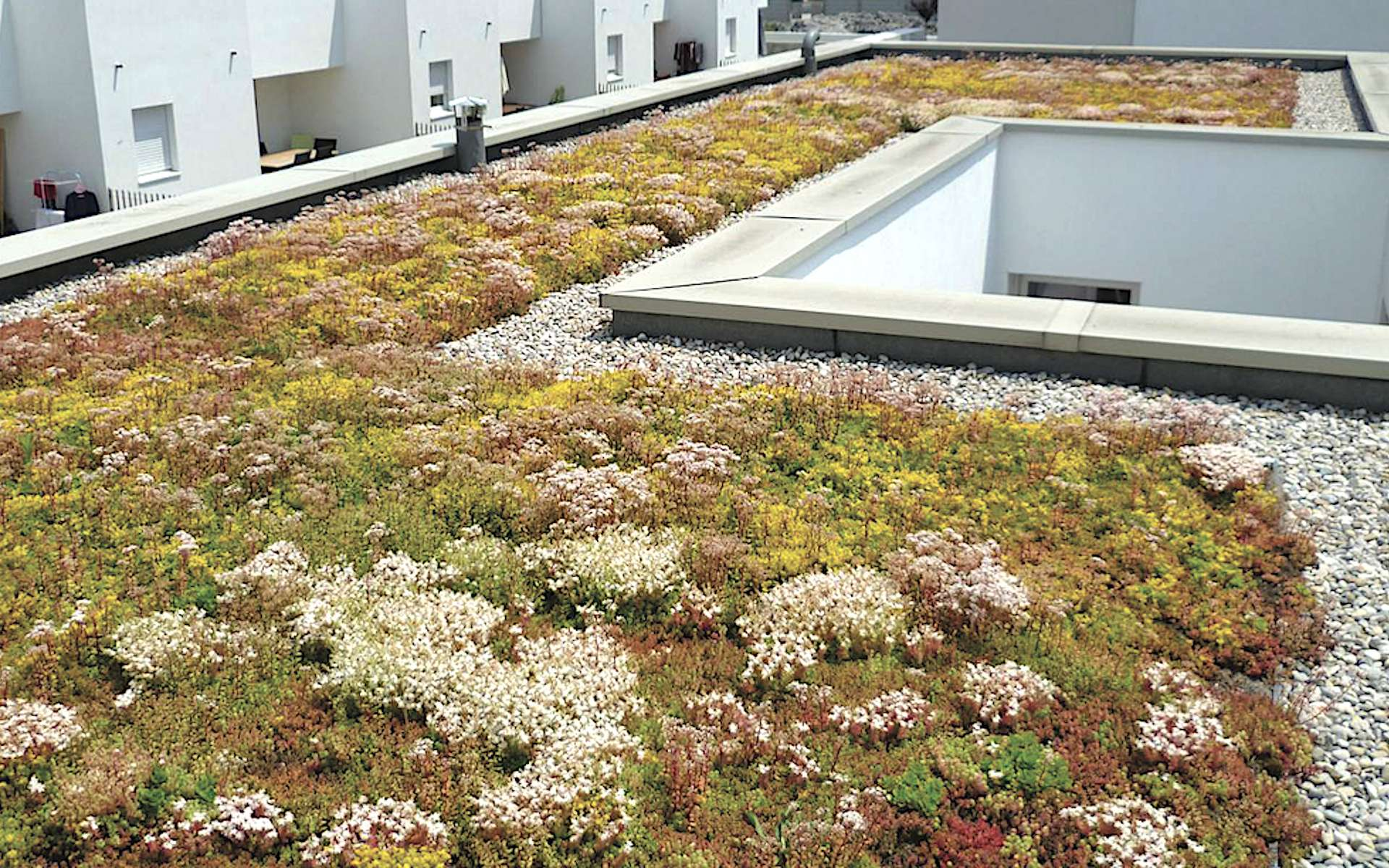 Ici, l'acrotère entoure une toiture en terrasse végétalisée. © Soprema