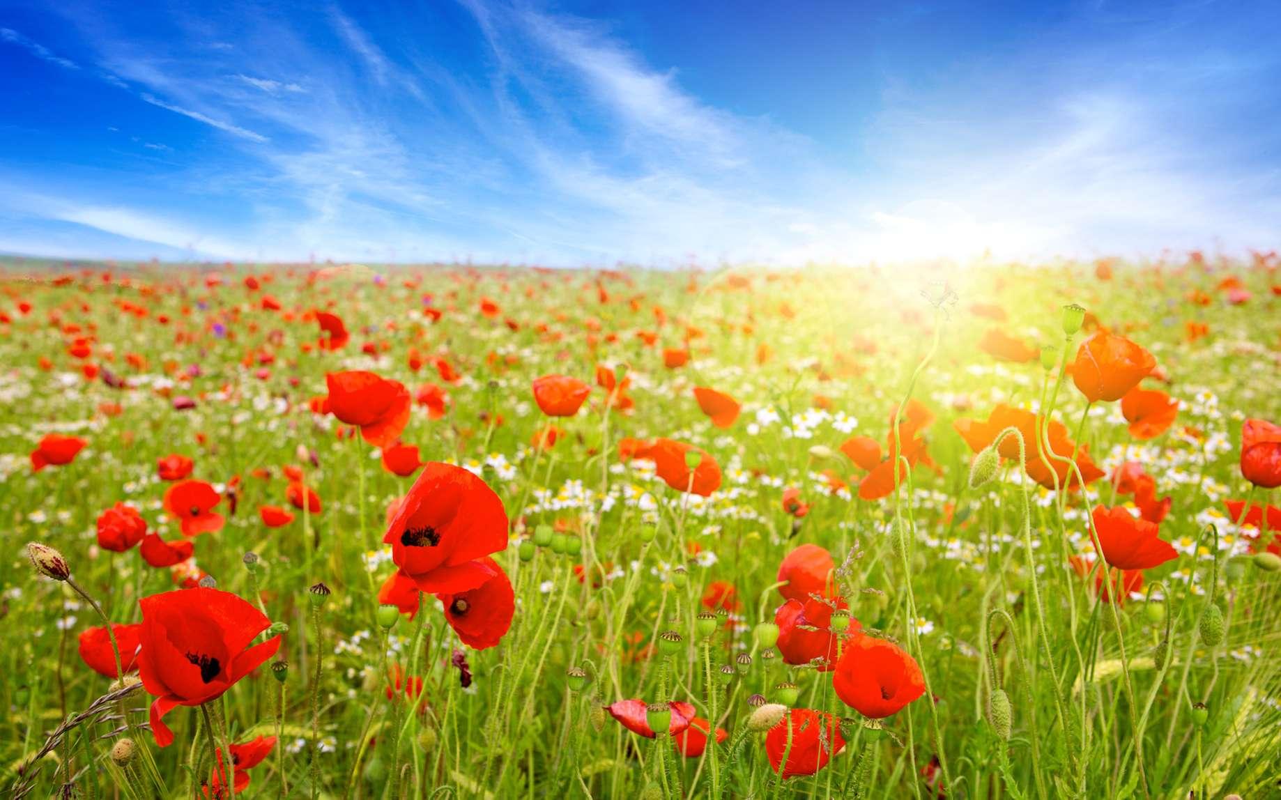 Les fleurs nous font bien. © Swetlana Wall