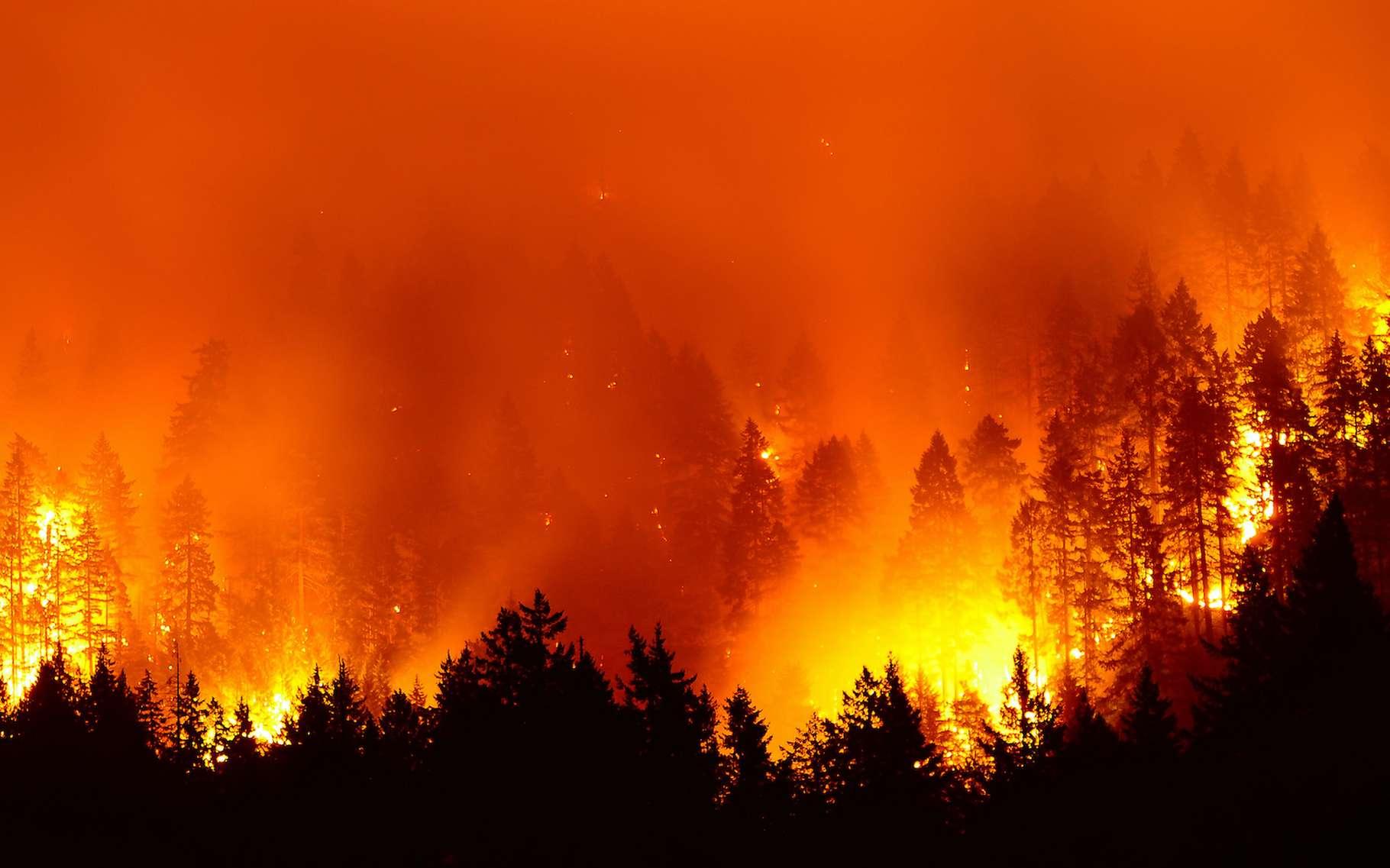 En 2020, l'ouest des États-Unis a été en proie à des incendies gigantesques. Leur fumée a été étudiée par des chercheurs de l'Institut Leibniz pour la recherche troposphérique (Tropos, Allemagne) lorsqu'elle est arrivée au-dessus de l'Europe. © Kirk Atkinson, Adobe Stock