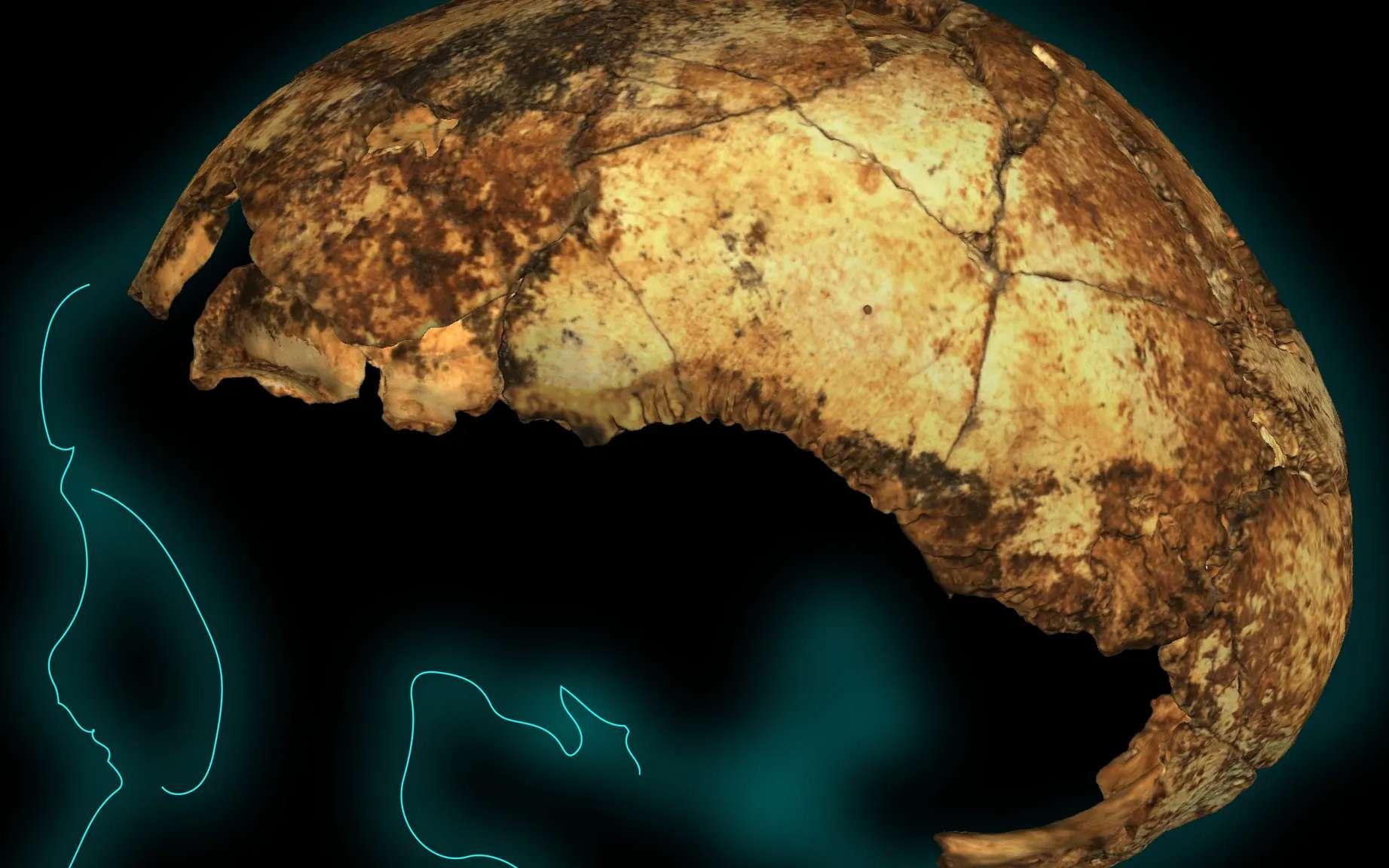 Ce crâne d'Homo erectus est âgé de 2 millions d'années, un record à ce jour. © Matthew V. Caruana