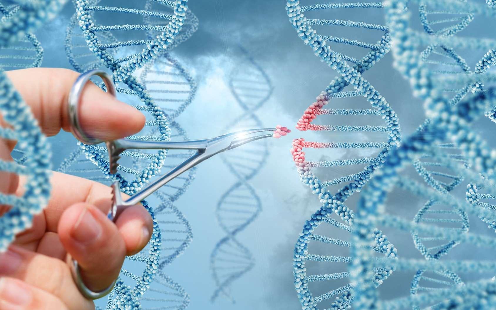 Les TALEN sont des ciseaux moléculaires qui servent à modifier le génome. © natali_mis, Fotolia