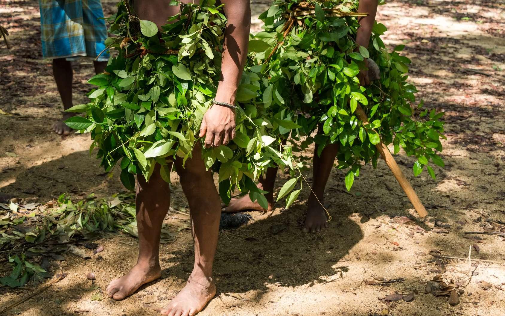 Les hommes préhistoriques en Asie du sud-est auraient fait preuve de créativité et d'innovation en fabriquant leurs outils en matière végétale au lieu de tailler la pierre. Il pourrait donc s'agir d'une civilisation du végétal. Ici, des chasseurs Vedda, peuple indigène du Sri Lanka. © greentellect, Fotolia
