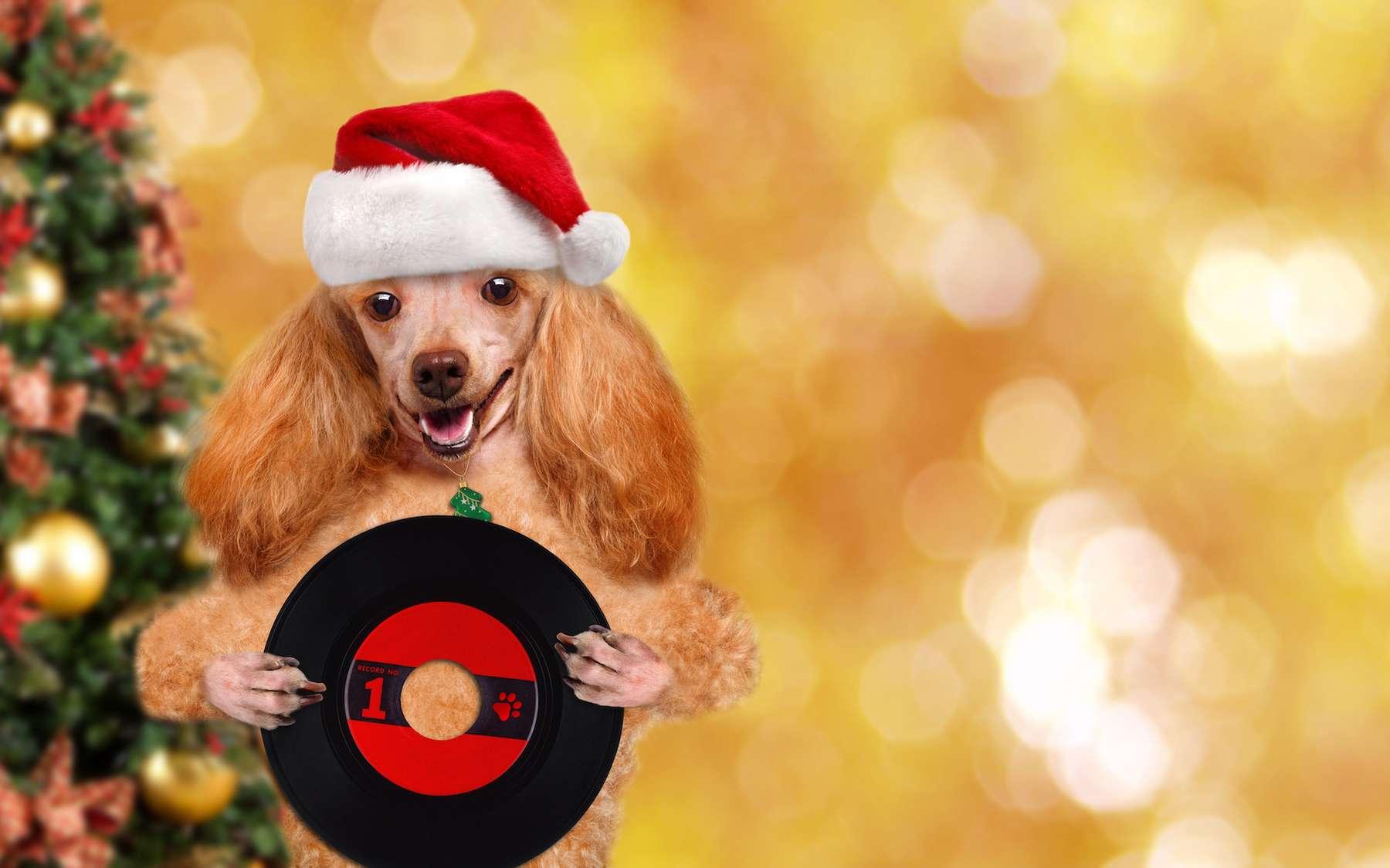 500 disques vinyle de ce chant de Noël spécialement conçu pour les chiens seront vendus au profit d'une œuvre caritative. © Rasulov, Adobe Stock