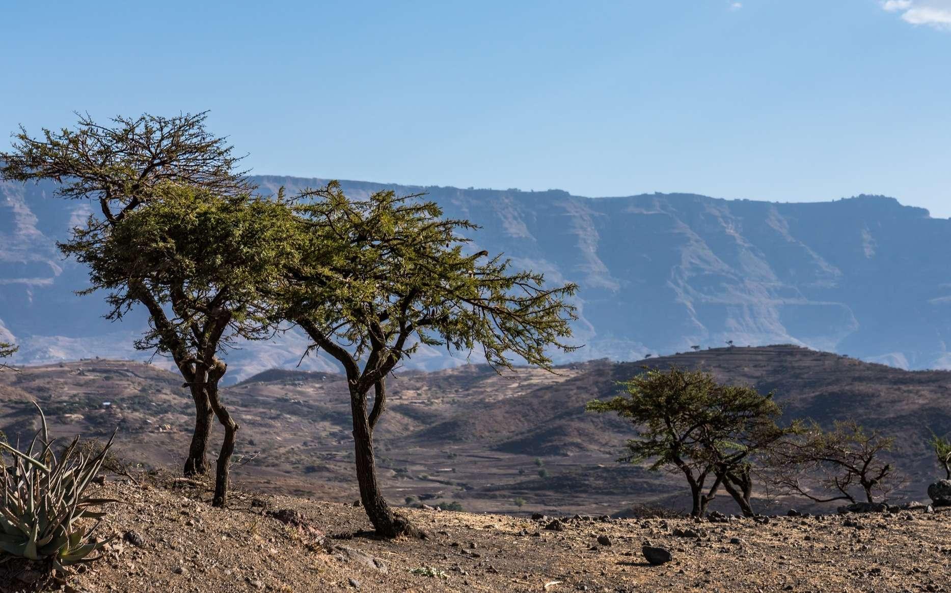 Lucy et Selam ont été trouvées en Ethiopie. © rudiernst, Fotolia