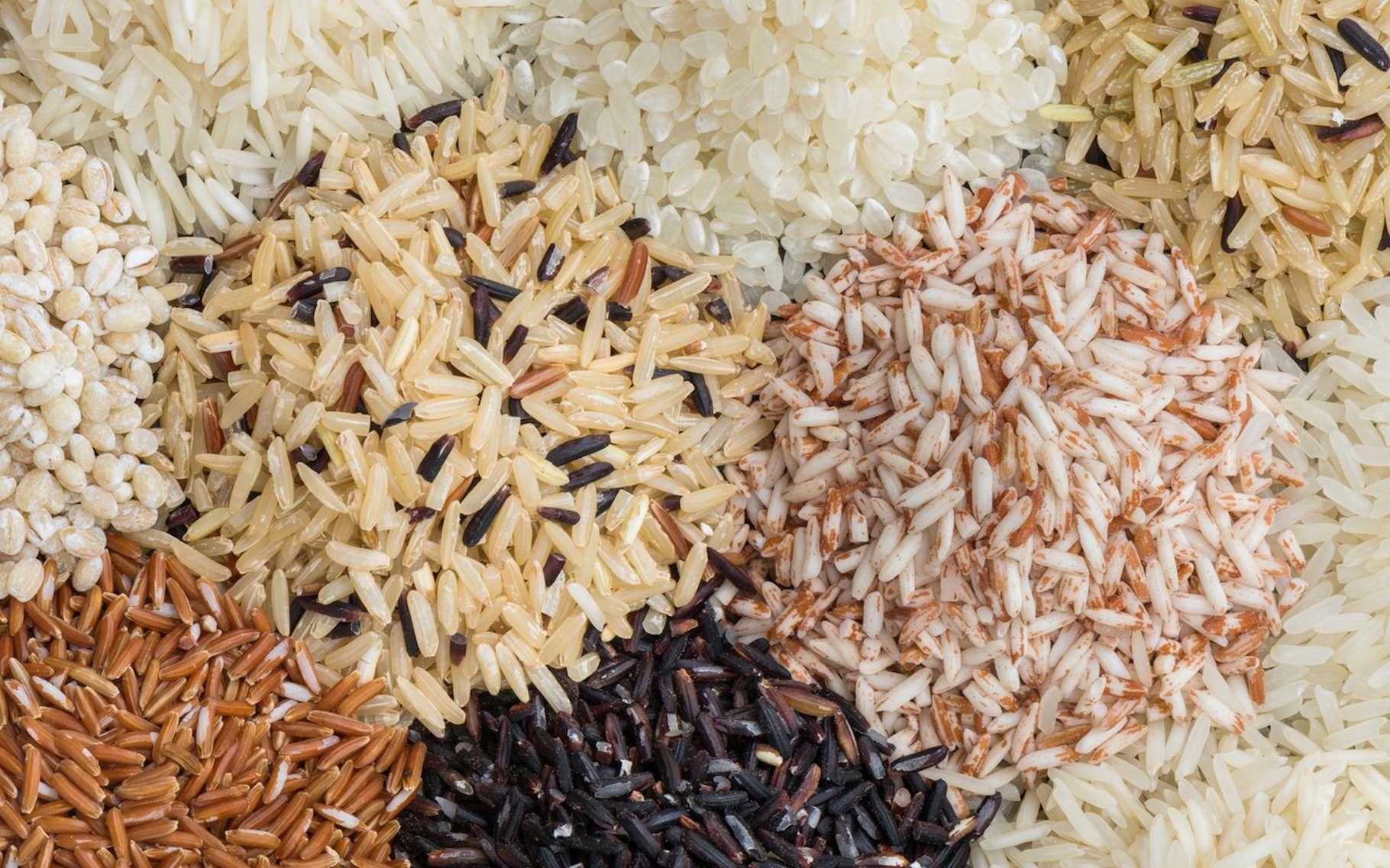 Des chercheurs mettent en garde : avec l'augmentation du taux de CO2 dans l'atmosphère, le riz risque de perdre de ses qualités nutritionnelles. © peangdao, Fotolia