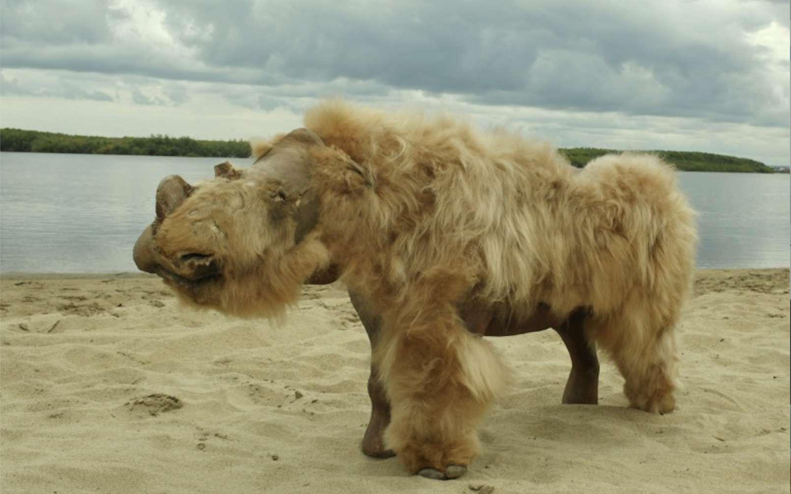 Un spécimen de rhinocéros laineux exceptionnellement bien conservé (Coelodonta antiquitatis) et baptisé Sasha. © Albert Protopopov, AFP