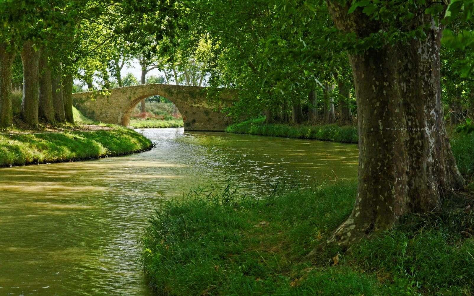 Le canal du Midi est inscrit sur la liste du patrimoine de l'humanité de l'Unesco depuis 1996. Sur les plus de 40 milliers de platanes qui arborent le linéaire, près de 10.000 sont malades et doivent être abattus. © Bruno Monginoux, Landschaft-Foto.com, cc by nc nd