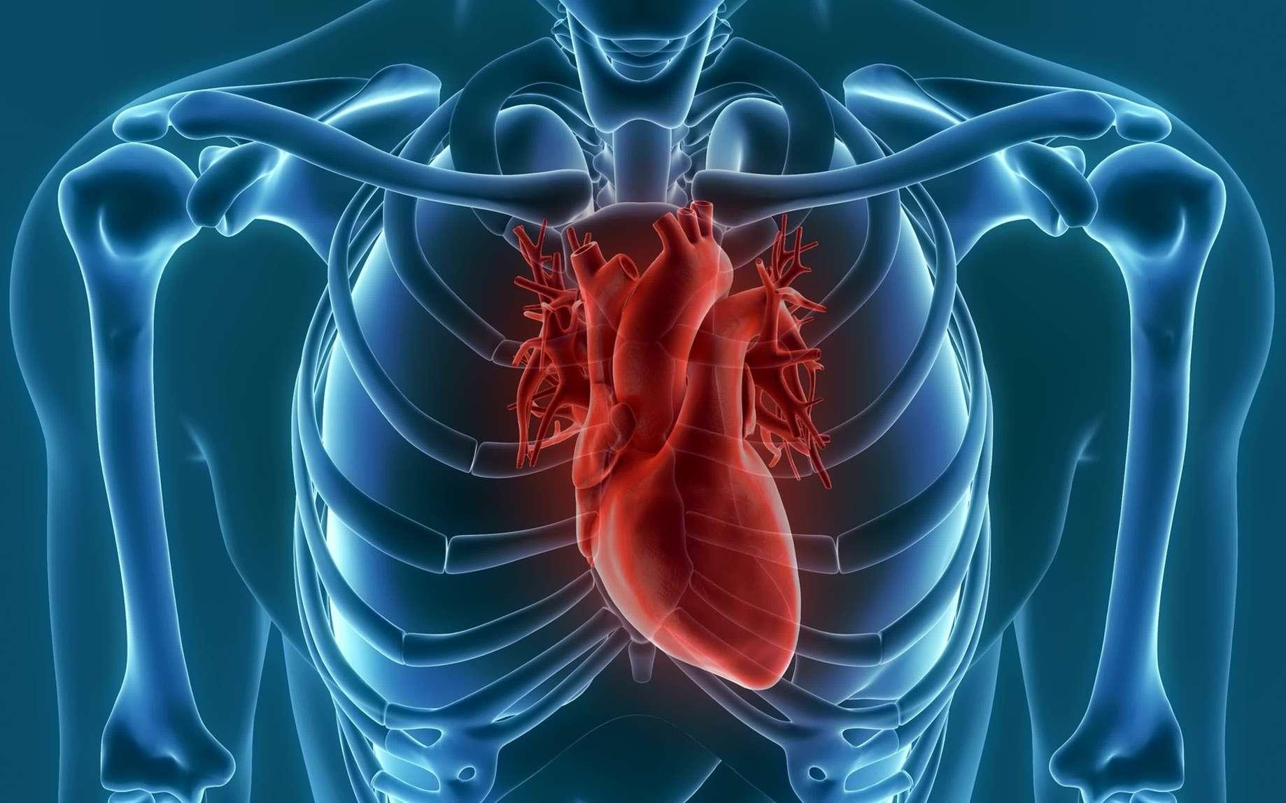 Le cœur artificiel de Carmat vise à pallier au problème de manque de donneurs pour des patients souffrant de graves insuffisances cardiaques. © unlimit3d, Fotolia