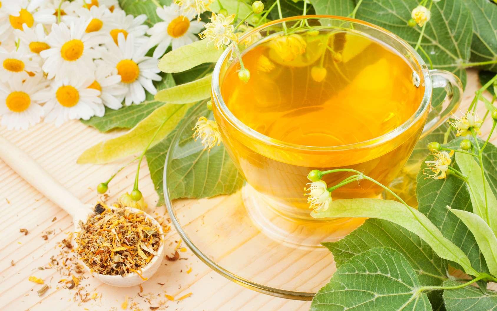 """Résultat de recherche d'images pour """"camomille thé"""""""