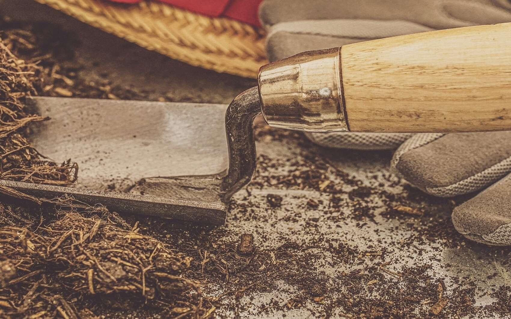 Un bon terreau doit-il contenir de la tourbe ? © suju by Pixabay