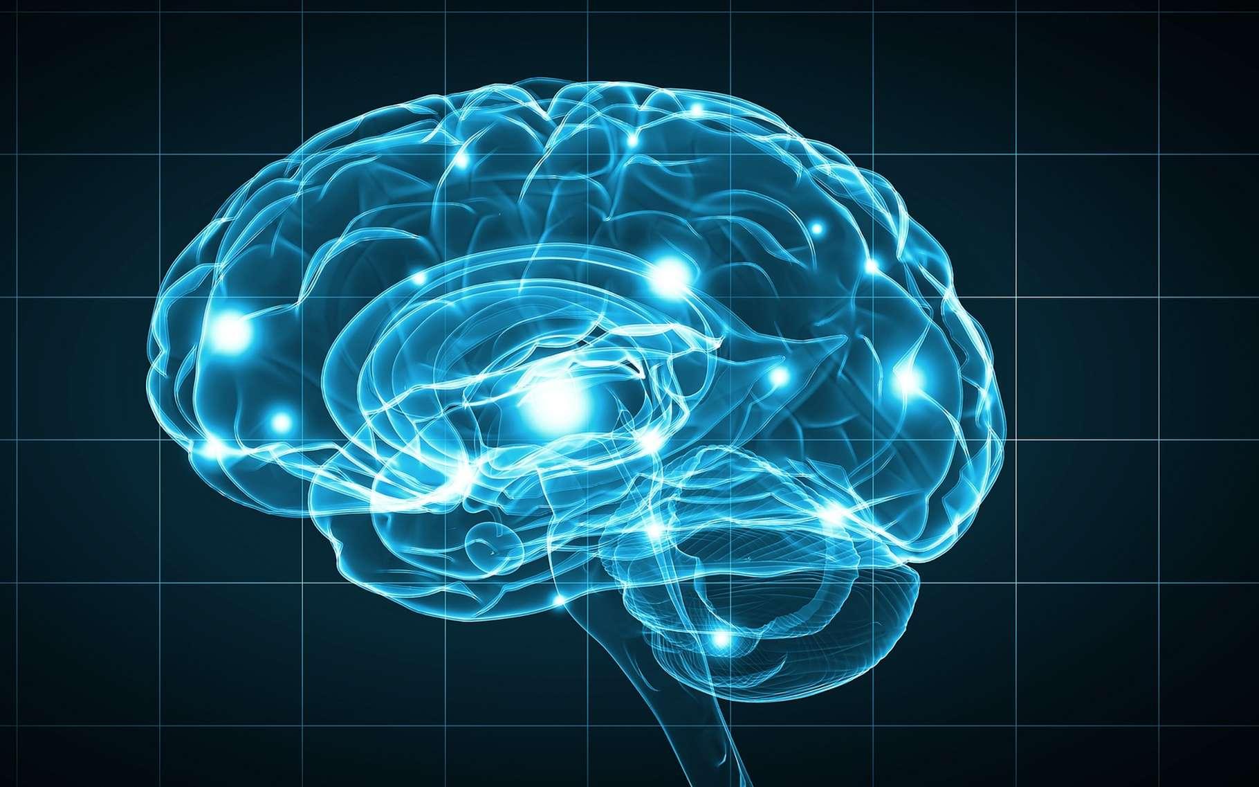 Vers 50 ans, l'obésité ferait vieillir le cerveau de 10 ans. © Sergey Nivens, Shutterstock