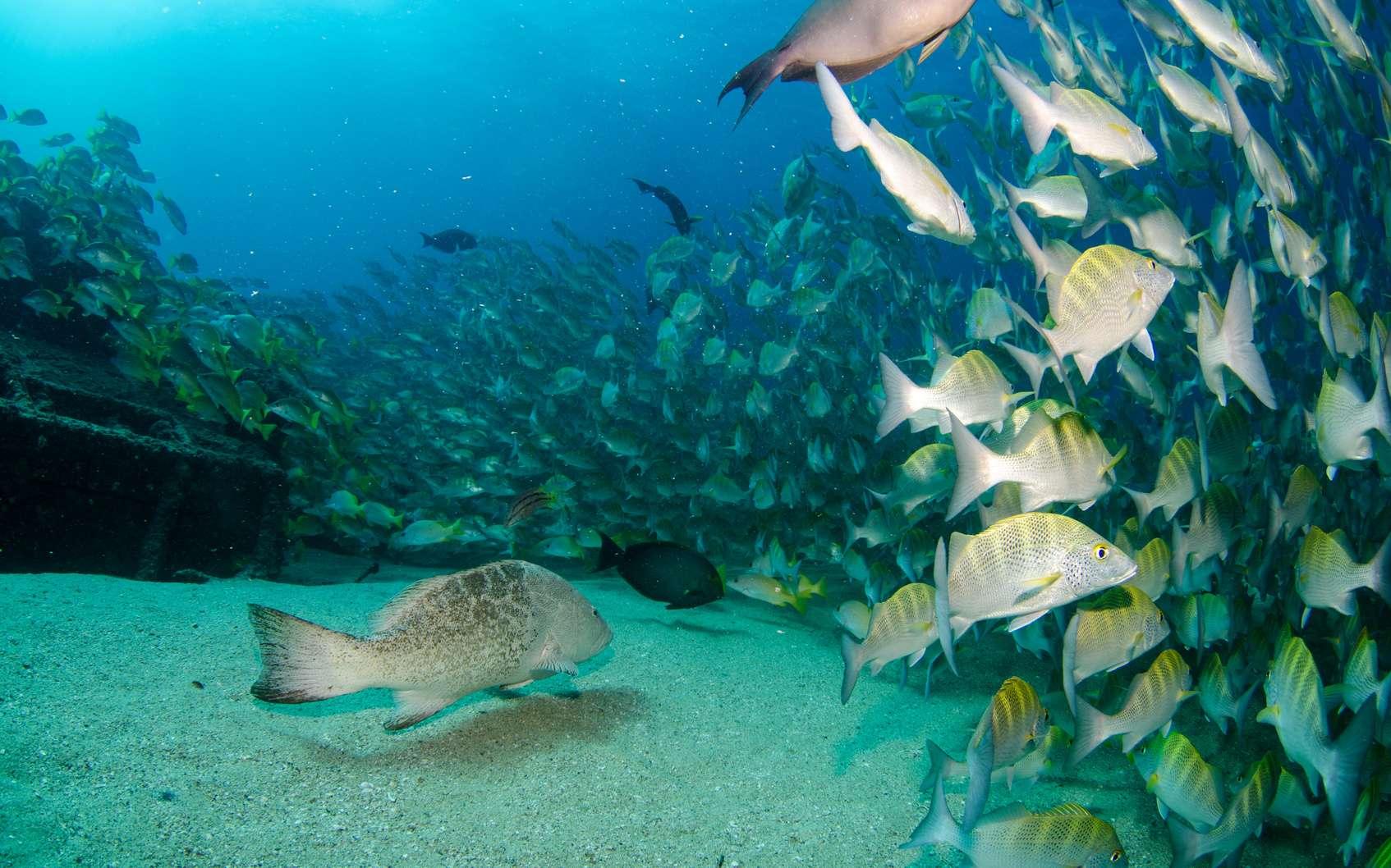 L'océanologue est un expert des fonds marins, qui cherche à approfondir les connaissances déjà existantes en matière de protection de l'environnement ou d'exploitation de ressources marines. © leonardogonzalez, Fotolia.