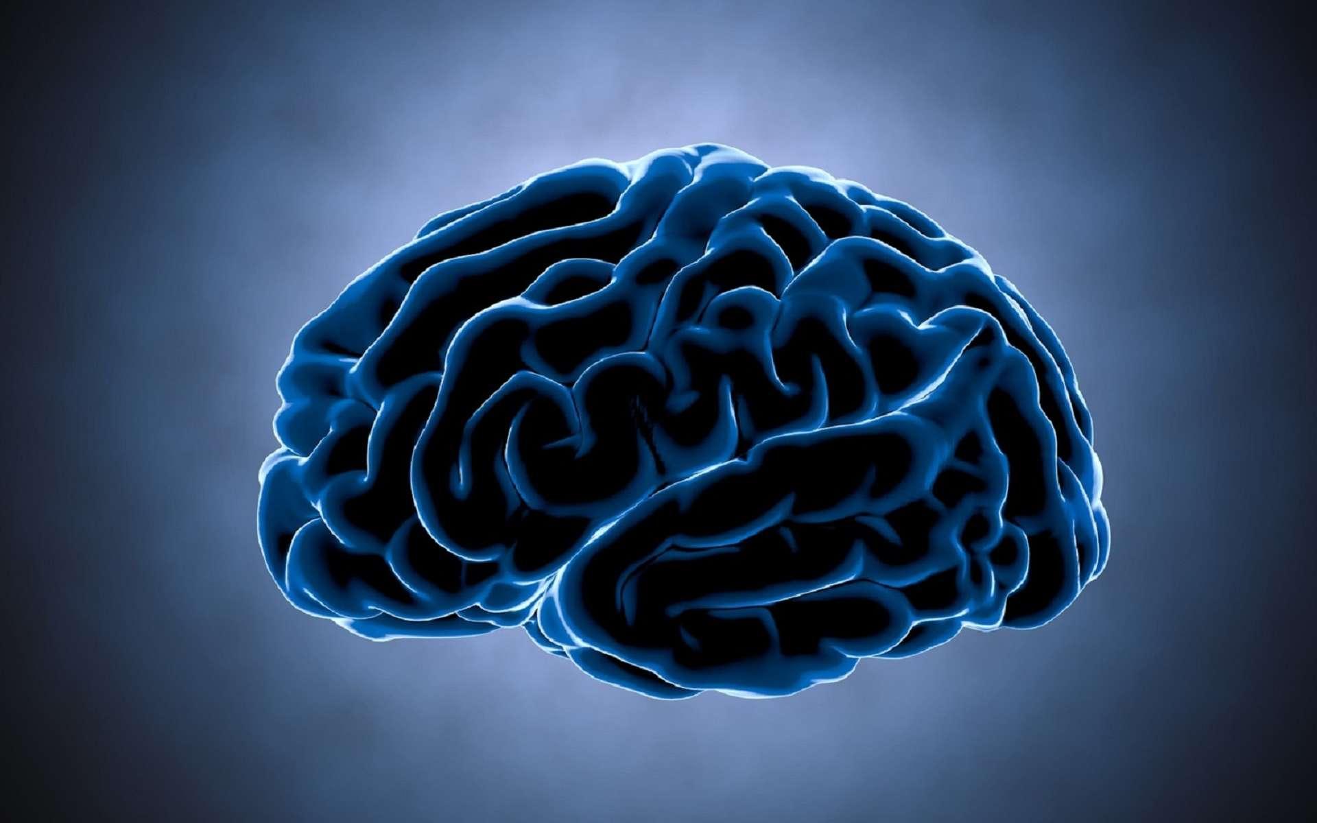 Le gyrus fusiforme est une circonvolution du cortex cérébral qui est impliqué dans la reconnaissance des visages. © chagpg, Fotolia