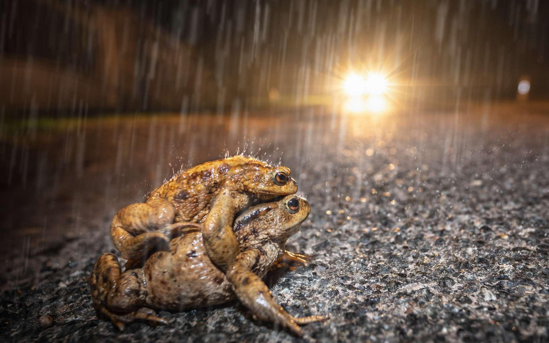 Chaque année, plus de 200 millions d'animaux sont tués sur les routes d'Europe. © Jean Kobben, Adobe Stock