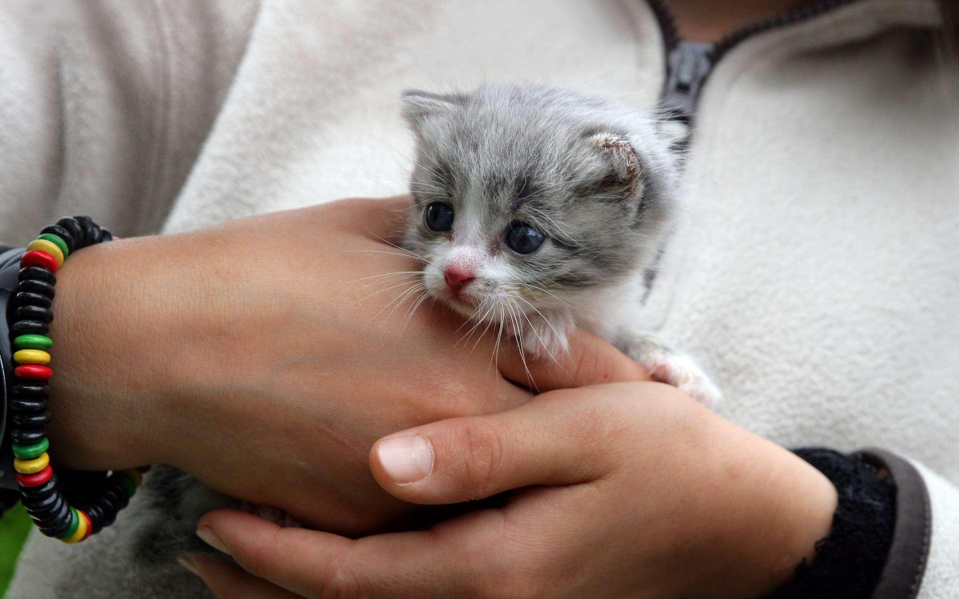 Sachez que le vaccin contre la rage est indispensable si vous devez voyager avec votre chat. © Phovoir
