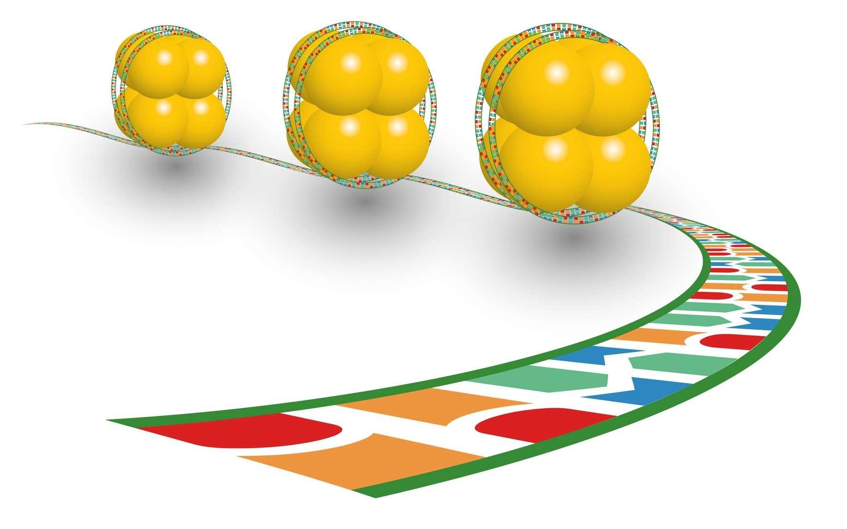 Un nucléosome comprend huit protéines d'histones autour desquelles s'enroule l'ADN. © deusin, Fotolia