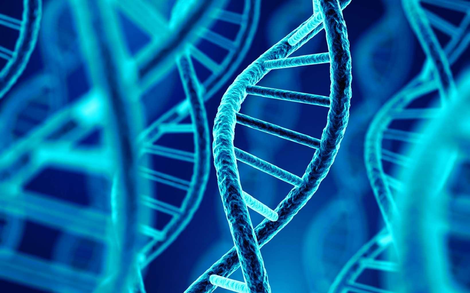 L'ADN forme une double hélice. © Sashkin, Fotolia