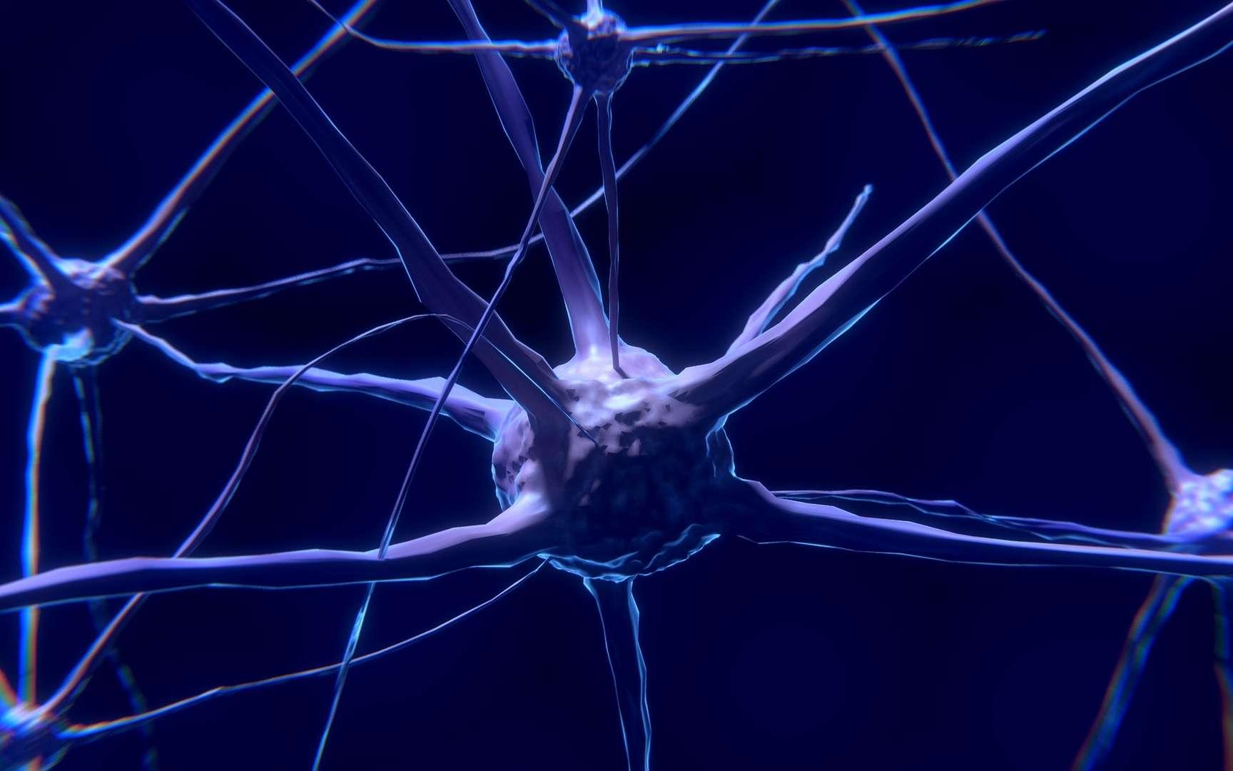 Les chercheurs ont identifié un circuit nerveux qui servirait à gérer la douleur qui se prolonge dans le temps. © ColiN00B, Pixabay, CC0