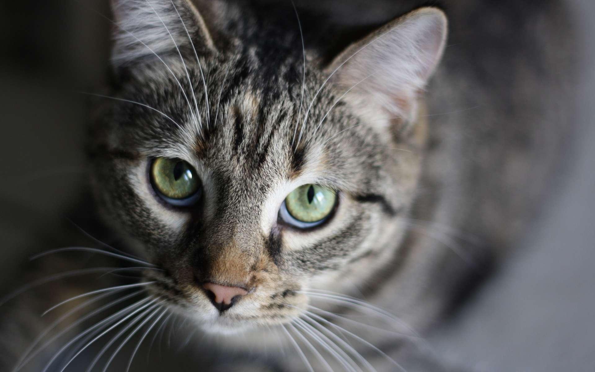 À quel âge un chat est-il adulte ? © Tim Genda, Flickr