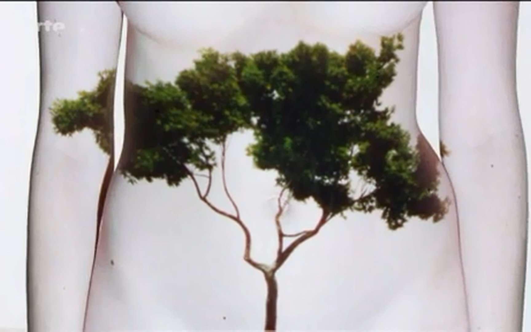 Avec sa flore intestinale, l'organisme humain est l'écosystème le plus dense de la planète. « Nous nous croyions isolés du reste du monde, des forêts, des océans. En réalité, nous avons en nous cette flore bactérienne, qui existe aussi en dehors de nous. Nous baignons dans un écosystème bactérien qui nous pénètre et qui fait partie de nous. » Pierre-Henri Gouyon, du Muséum national d'histoire naturelle, un des intervenants de ce documentaire. © Arte France - Inserm – Scientifilms - 2013