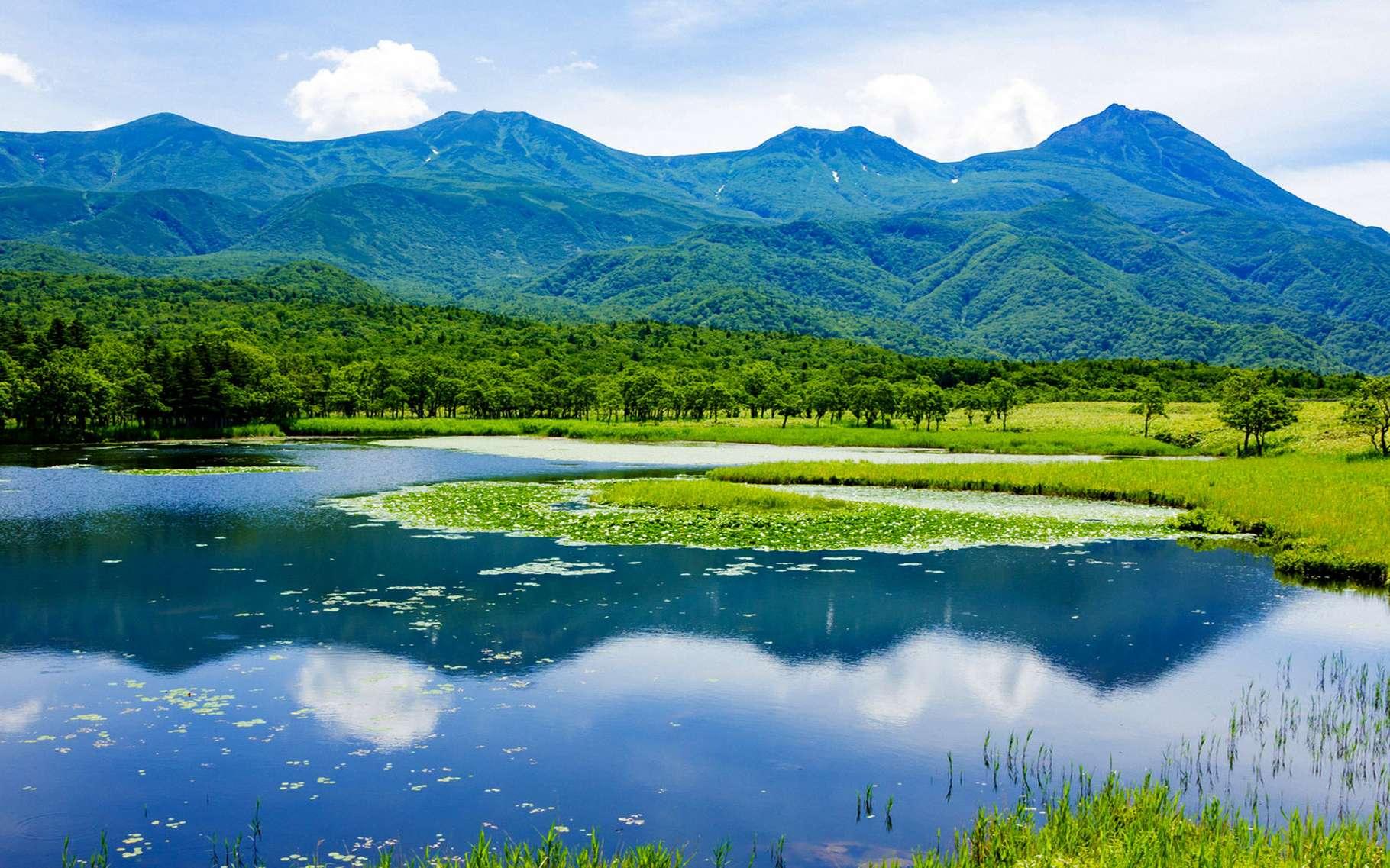 La péninsule de Shiretoko, au nord-est de Hokkaido, l'île la plus au nord du Japon. L'interaction des écosystèmes marins et terrestres, la grande productivité biologique et les glaces marines saisonnières créent un environnement très particulier. Il abrite des espèces en danger et endémiques, comme le kétoupa de Blakiston et la plante Viola kitamiana, ainsi que des oiseaux migrateurs, de nombreux salmonidés et des mammifères marins, notamment le lion de mer de Steller. © CC-by-sa igo 3.0 Unesco