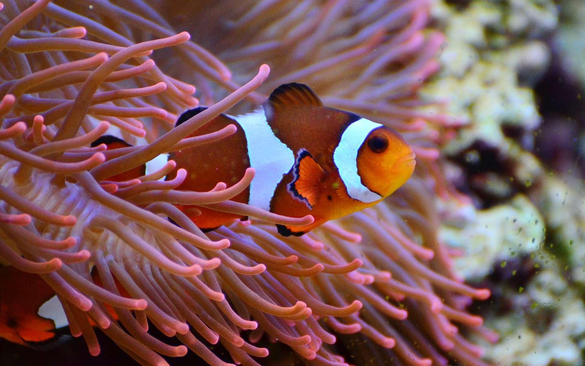 Le sable est nécessaire dans l'aquarium uniquement si l'on héberge des animaux inféodés au substrat qui, par exemple, s'enterrent la nuit ou vivent dans un terrier. © congerdesign, Pixabay, CC0 Creative Commons