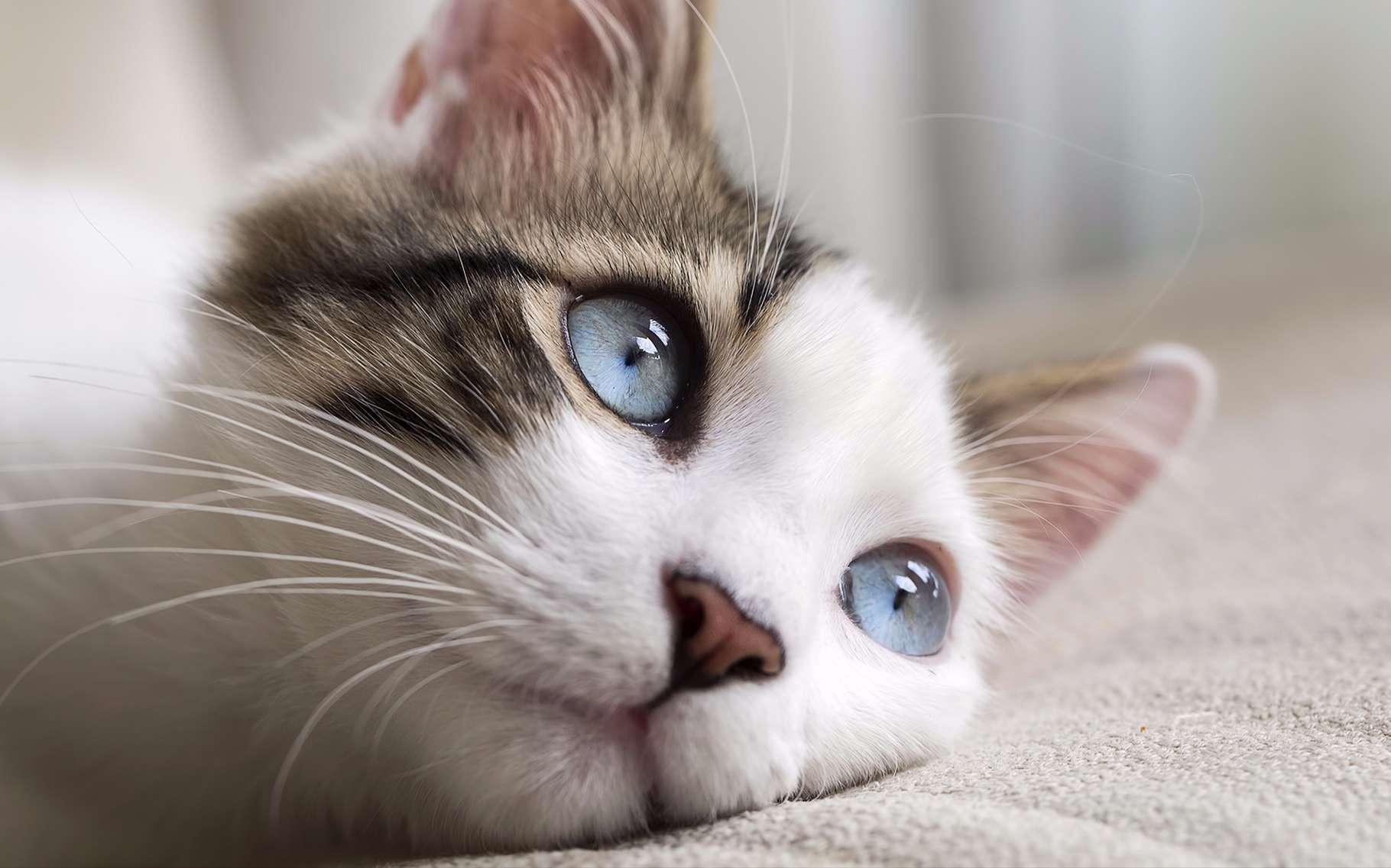 À chaque portée, un chat femelle peut mettre au monde jusqu'à huit chatons. La solution la plus efficace pour éviter ces portées est la stérilisation. © Esin Deniz, Shutterstock