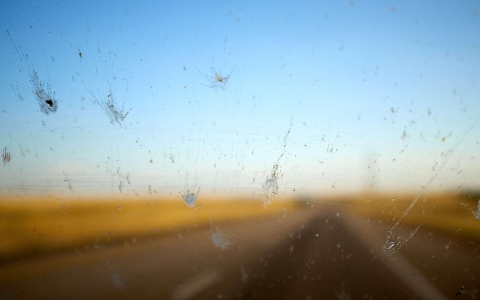 Il semble y avoir de moins en moins d'insectes sur nos pare-brise. La faute à une extinction de masse que les insectes subissent depuis quelques années, selon les chercheurs. © Colby, Fotolia