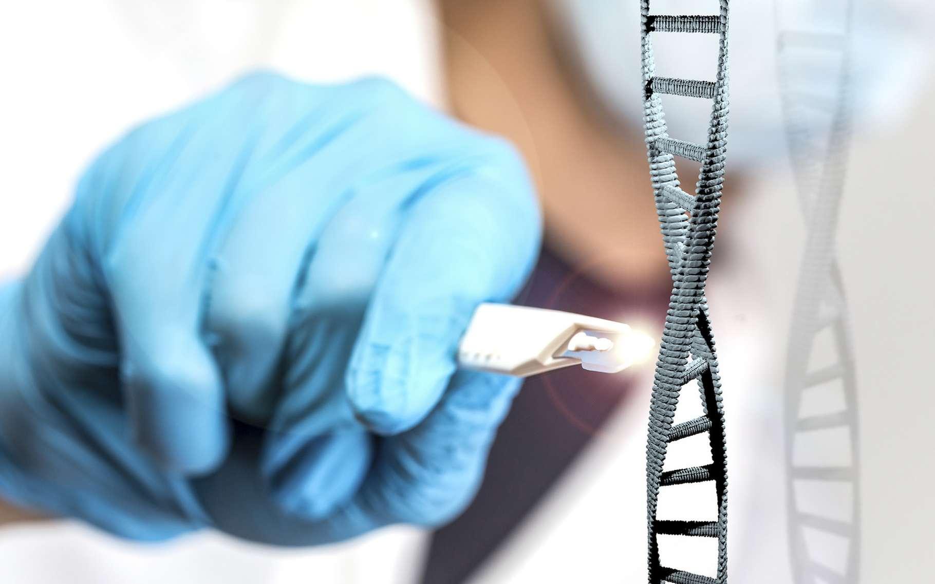 Des chercheurs recommandent d'utiliser l'édition génomique avec prudence après que leur tentative de production d'un variant de manioc résistant au virus de la mosaïque a entraîné une mutation du virus résistante à leurs interventions. © Tobias Arhelger, Fotolia