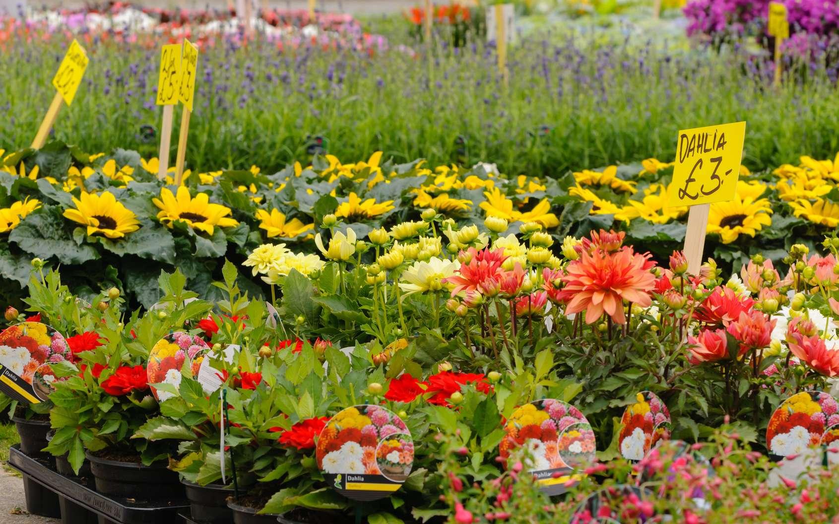 Attention avant d'acheter vos plantes par correspondance. © Stephen, fotolia