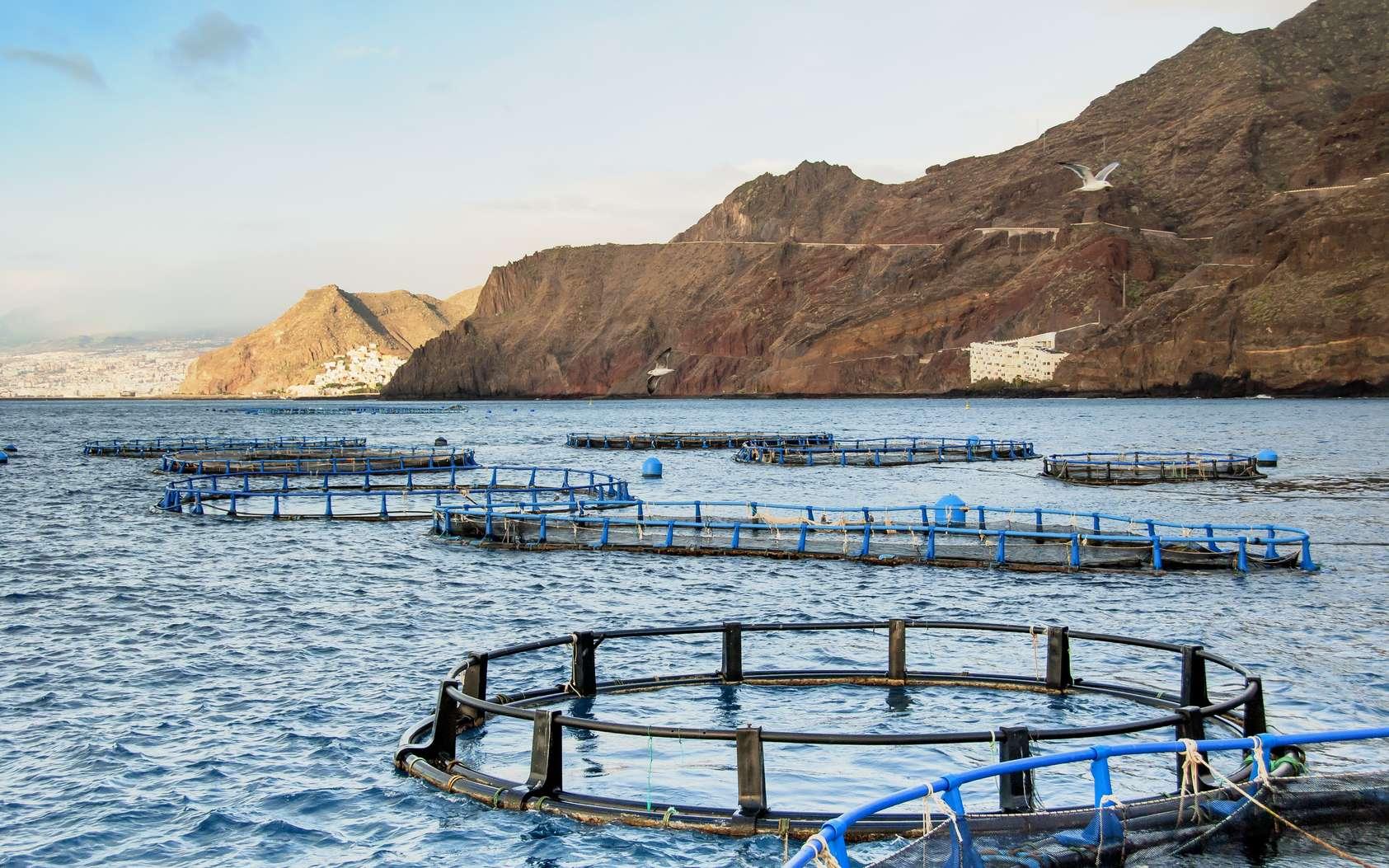 L'aquaculteur surveille son élevage de poissons et veille à leur bonne reproduction et à leur bonne croissance. © vallefrias, Fotolia.