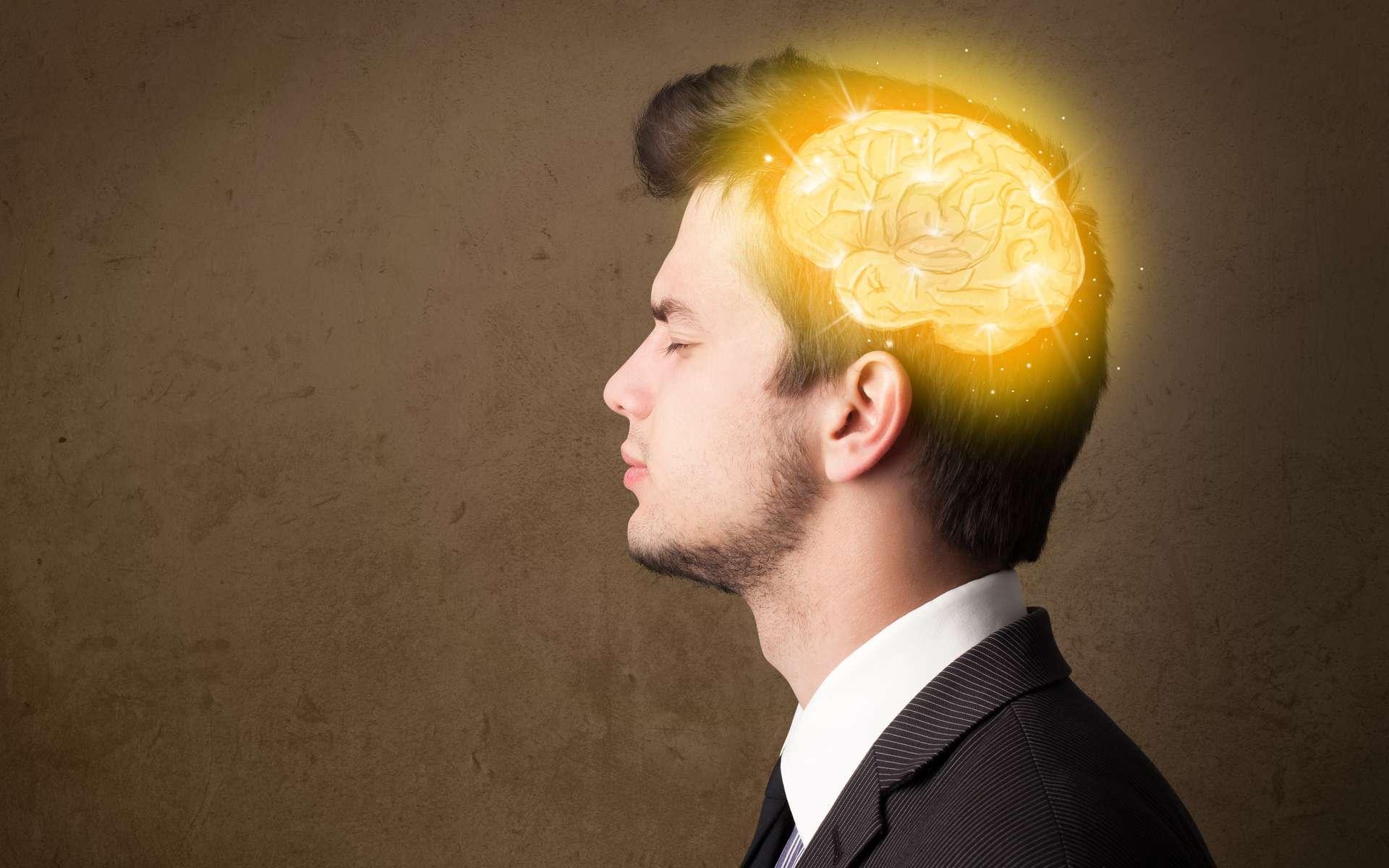 Cerveau et testicules, des organes pas si différents que cela. © ra2 studio, Adobe Stock