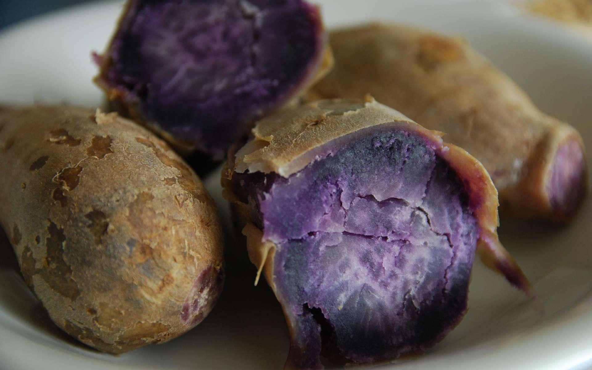 Des chercheurs font la lumière sur l'origine de la patate douce et portent un coup dur à l'hypothèse d'un contact précoce entre Polynésie et Amérique. © Alpha, Flickr
