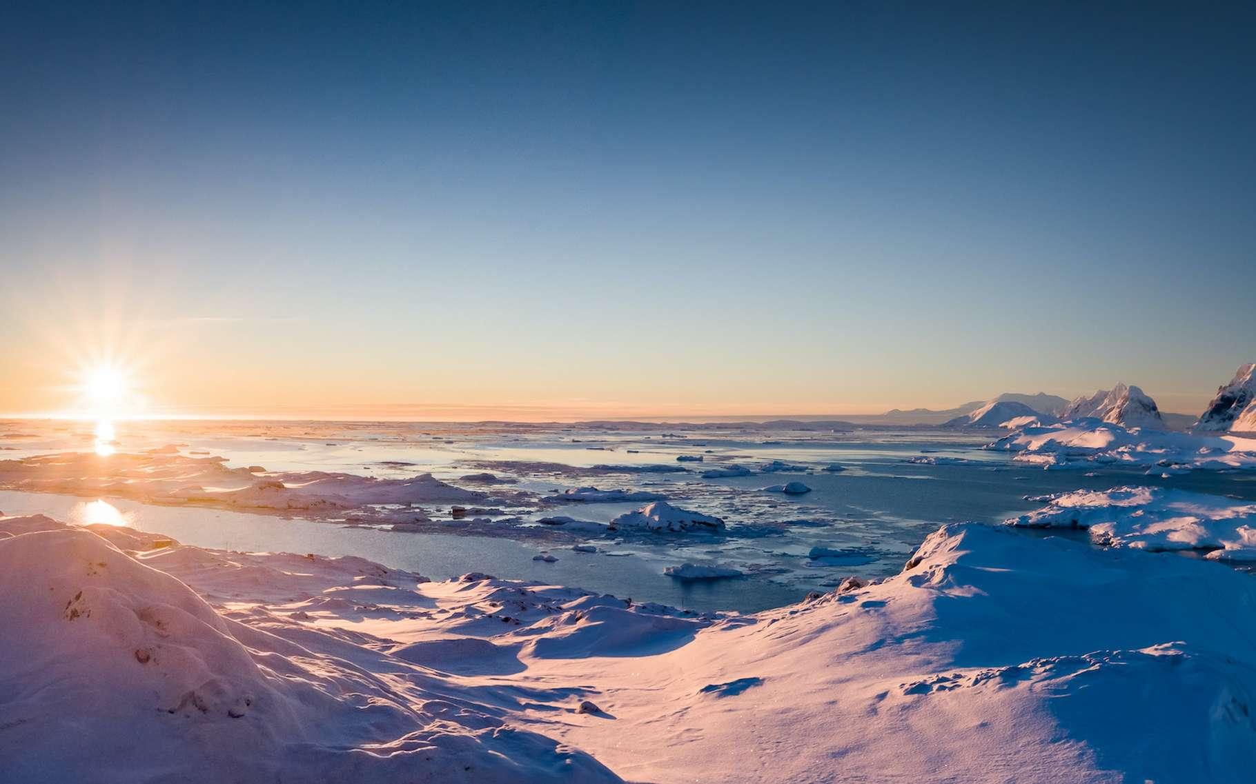 Avec la canicule de l'été dernier en Antarctique, des microalgues vertes ont proliféré en nombre, teintant la neige de vert. © Goinyk, Adobe Stock