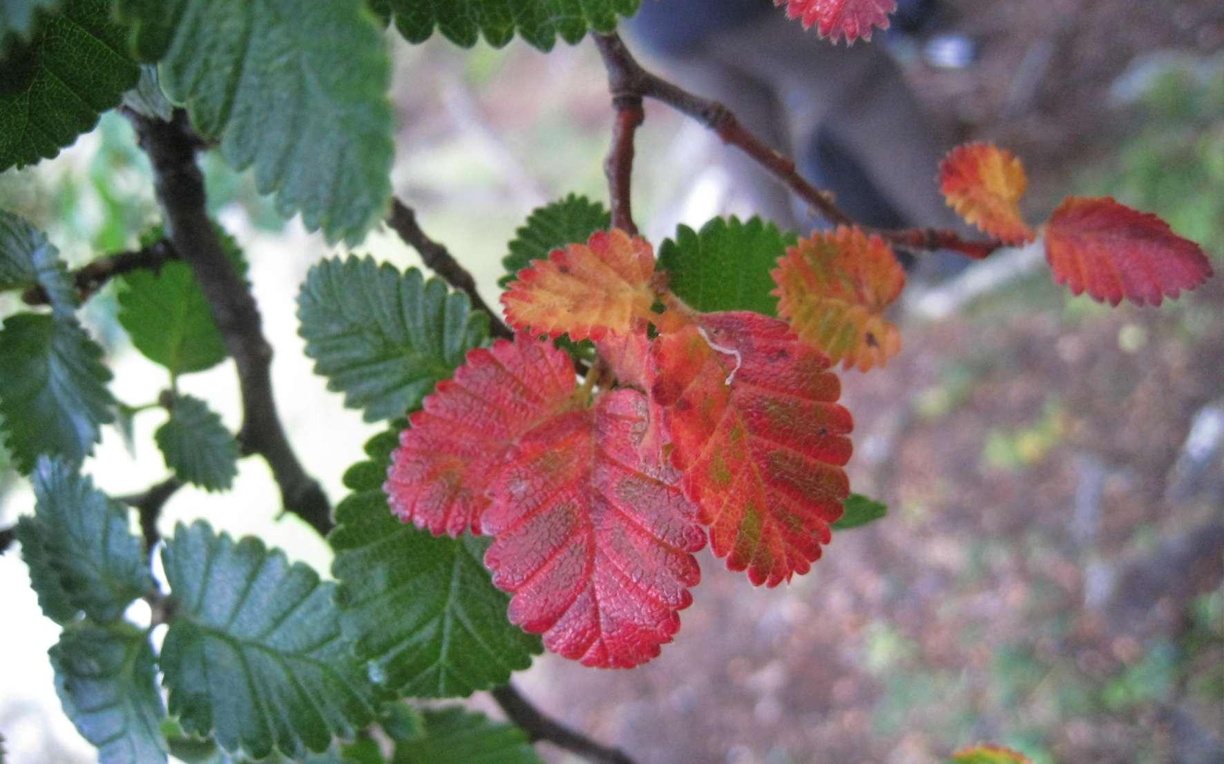 Le hêtre est un arbre au feuillage caduc. © Martine, Flickr, CC by-nc 2.0