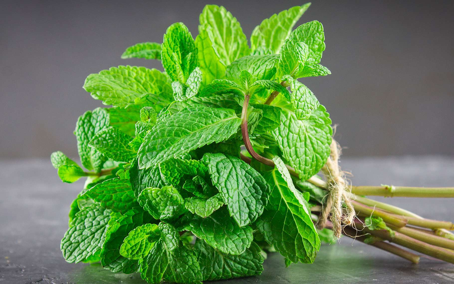 Spearmint: culture and properties |  Folder