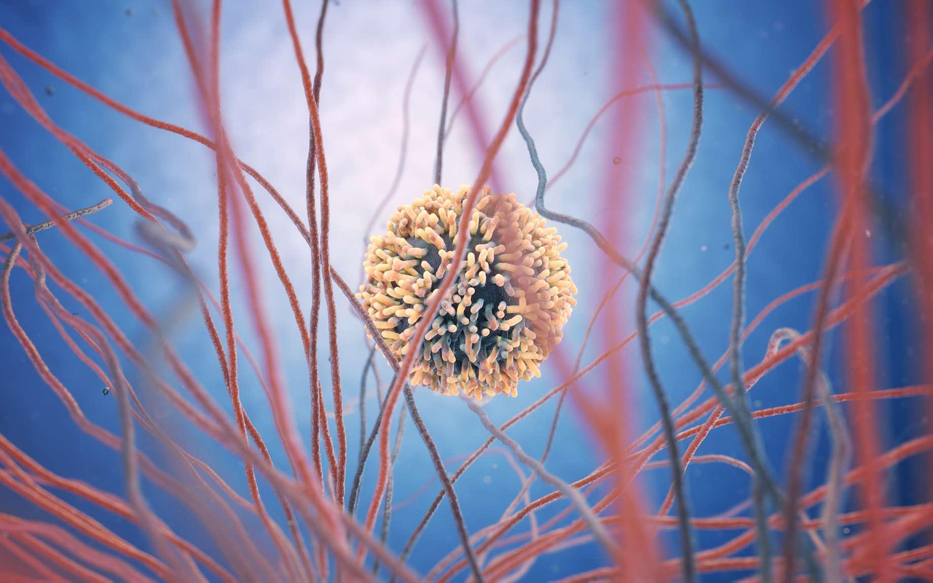 Les globules blancs ou leucocytes sont les cellules de l'immunité. Certaines ont une action non spécifique (comme les macrophages), et d'autres une action spécifique, comme les lymphocytes. © Anne Weston, Wellcome Images, Flickr, cc by nc nd 2.0