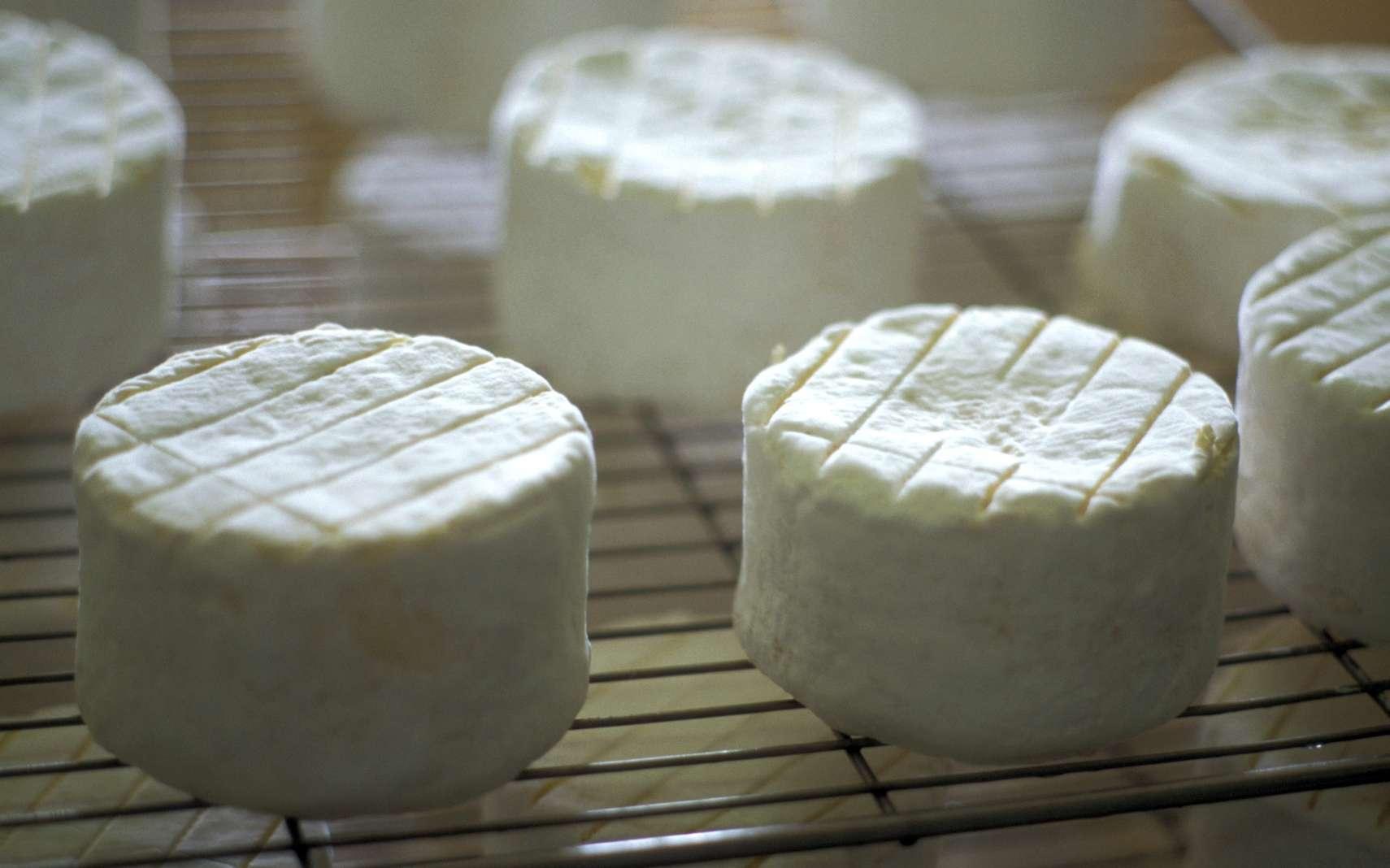 Les fromages frais, de vache ou de chèvre, sont les plus facile à fabriquer chez soi. © FOOD-micro, Fotolia
