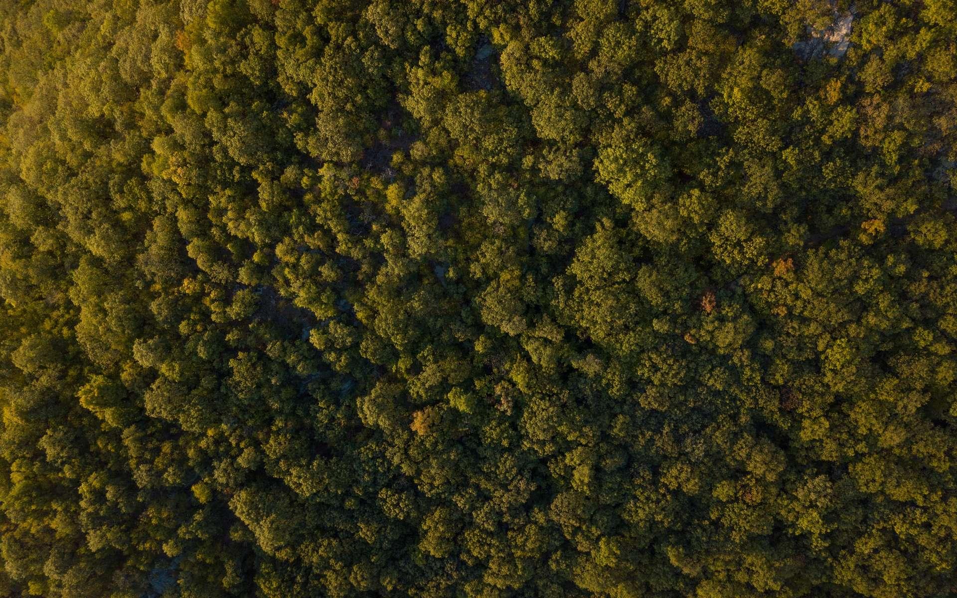 Les forêts européennes ne peuvent pas lutter seules contre le réchauffement. © Heather Shevlin, Unsplash