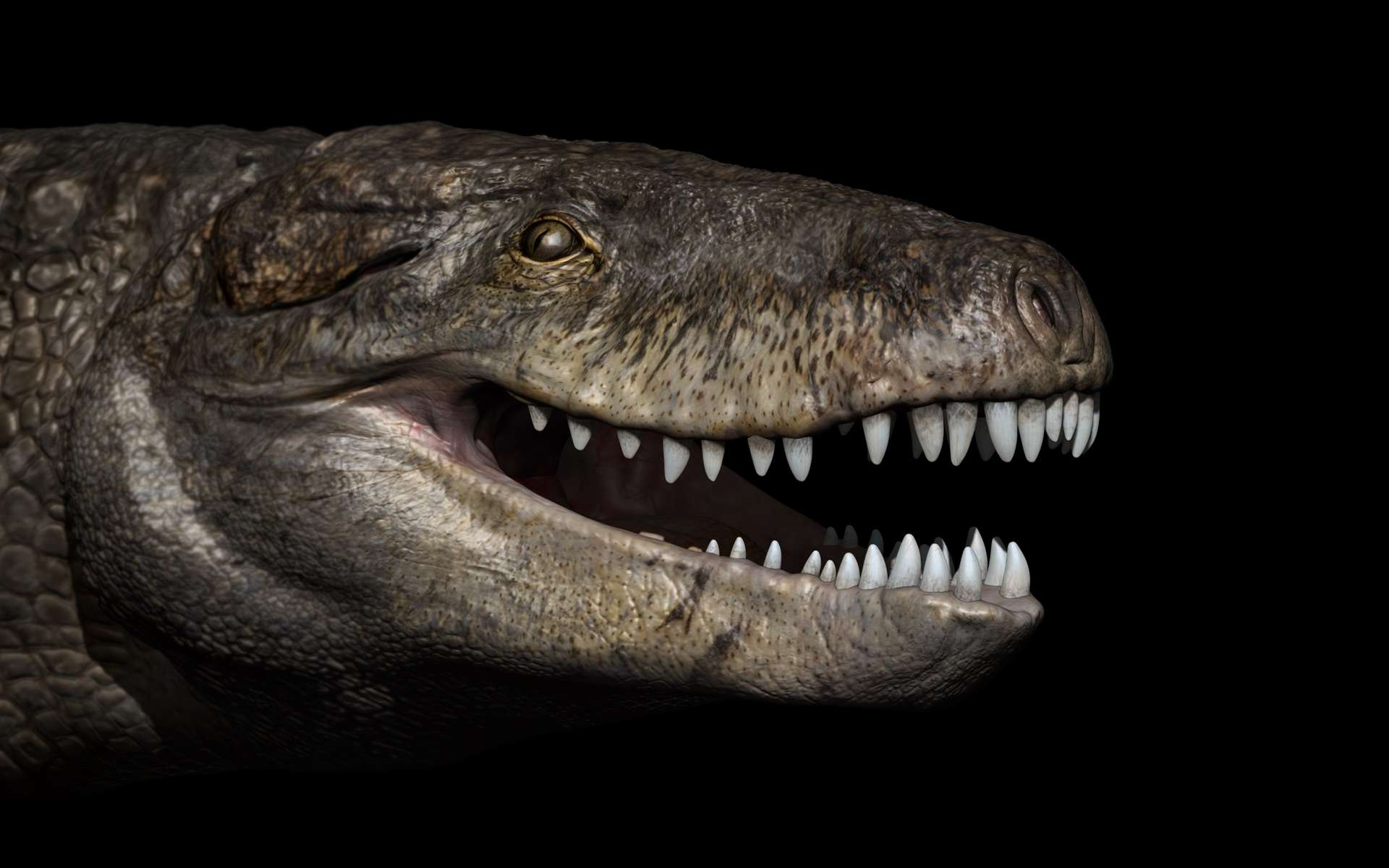 Reconstitution d'une tête de Razanandrongobe sakalavae. Certaines de ses dents mesuraient 15 cm de long. © Fabio Manucci