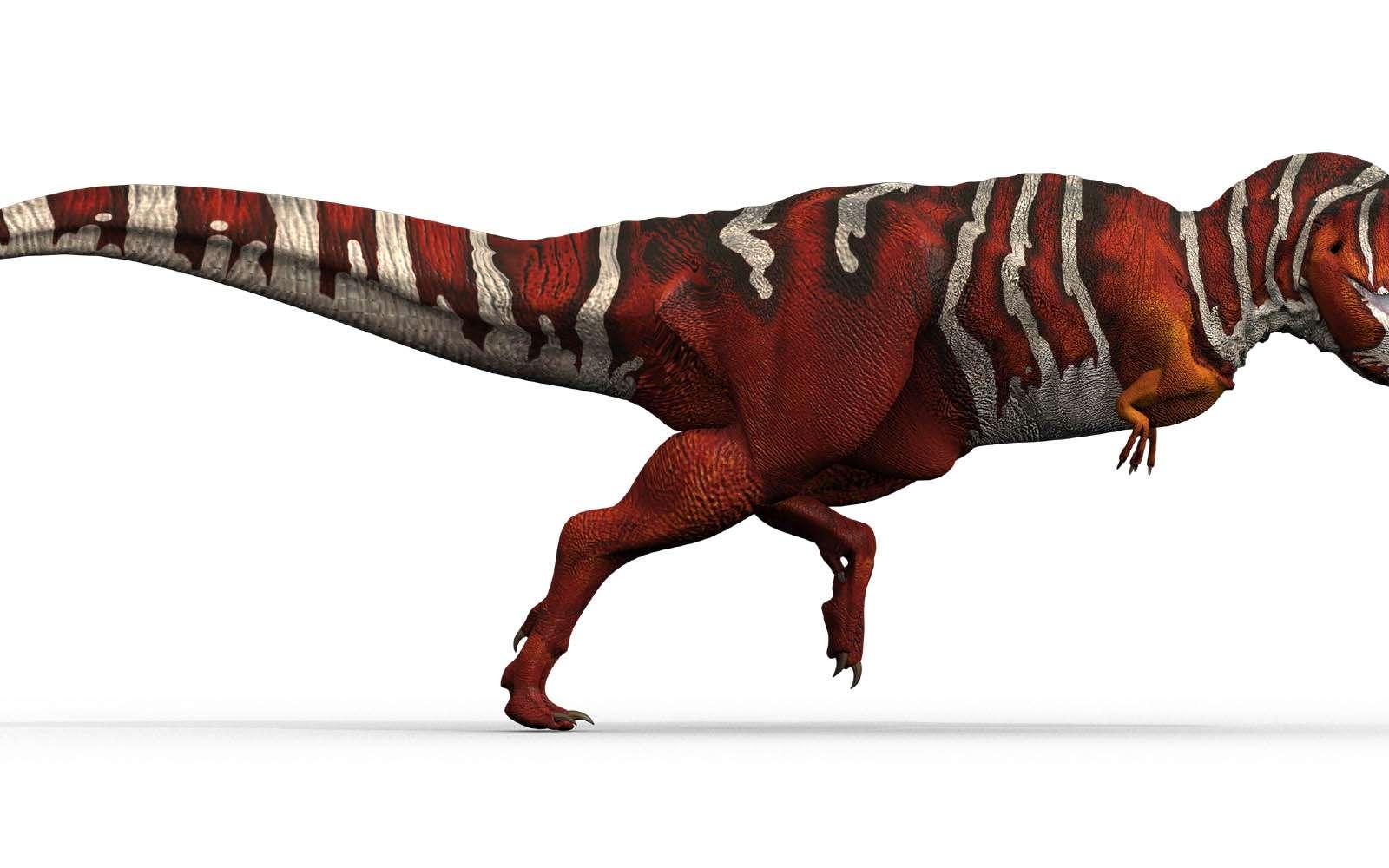 Un tyrannosaure, qui vivait au Jurassique, lointain descendant des premiers protodinosaures bipèdes du Trias. © Domaine public