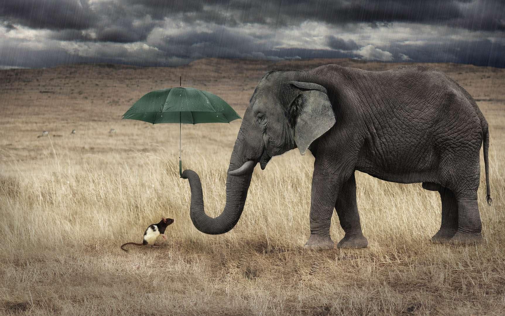 Les éléphants ont-ils réellement peur des souris ? © Ettore, Fotolia