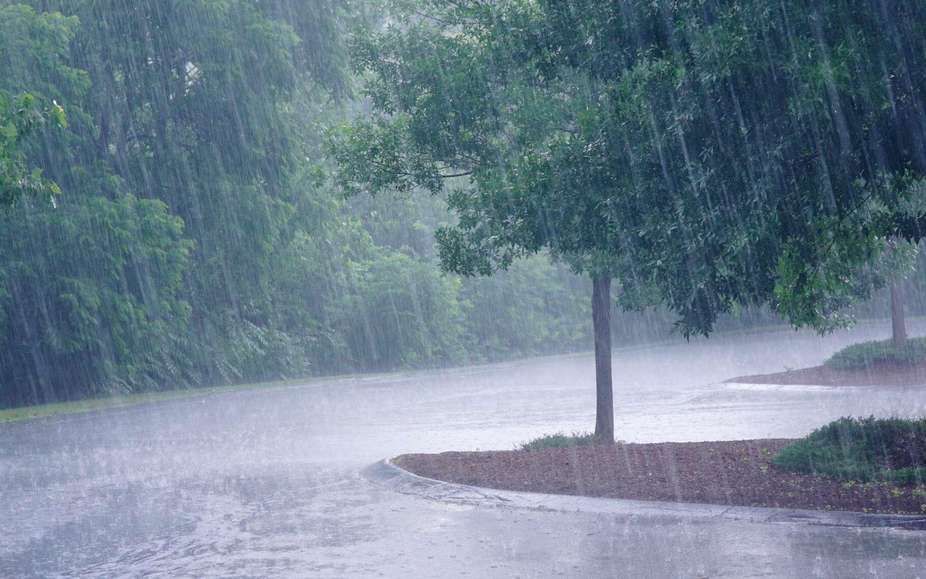 La sensation agréable que nous ressentons à l'odeur de la pluie serait héritée de notre passé d'agriculteur et de la joie ressentie lorsque la pluie revenait après une période de sécheresse. © nd700, Fotolia