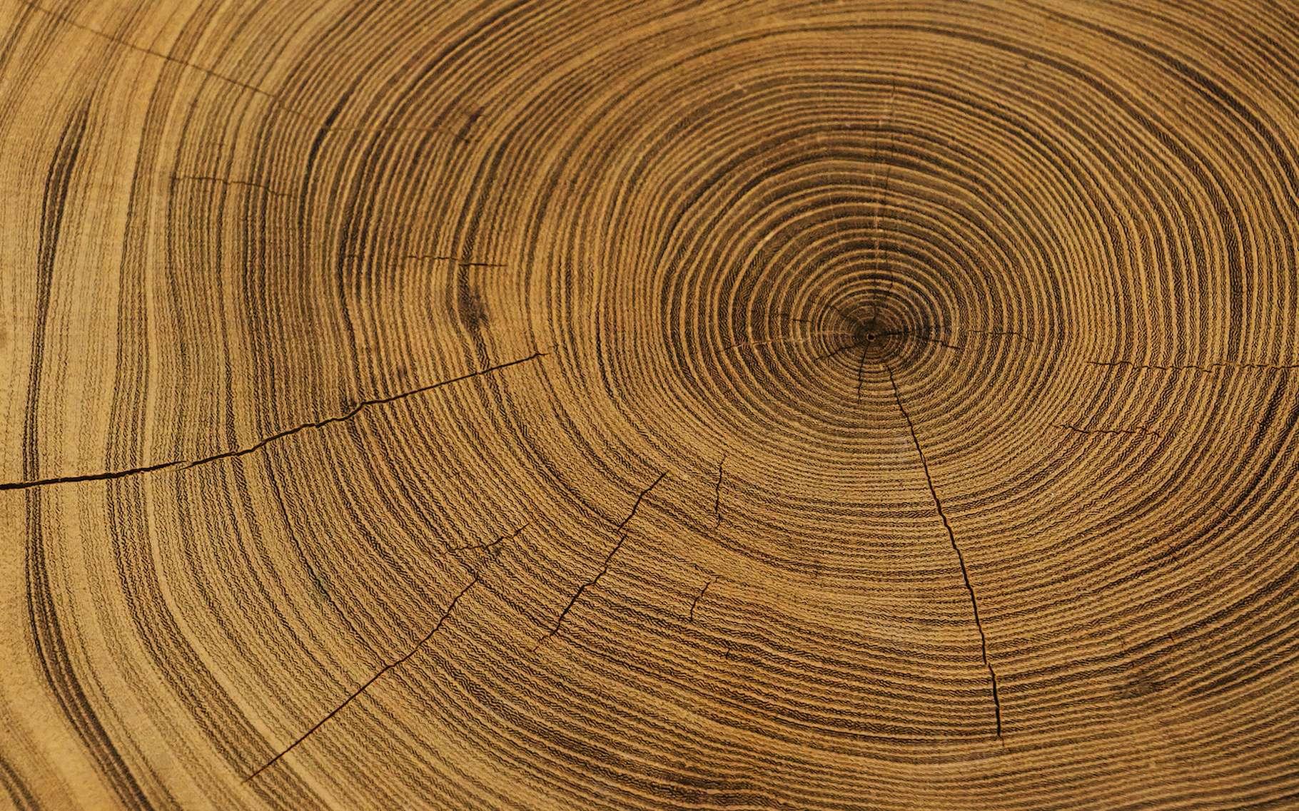 Des chercheurs de l'université du Colorado (États-Unis) ont cherché, dans les cernes des arbres, des traces d'explosion d'étoiles en supernovae survenues par le passé. © CaptureAndCompose, Adobe Stock